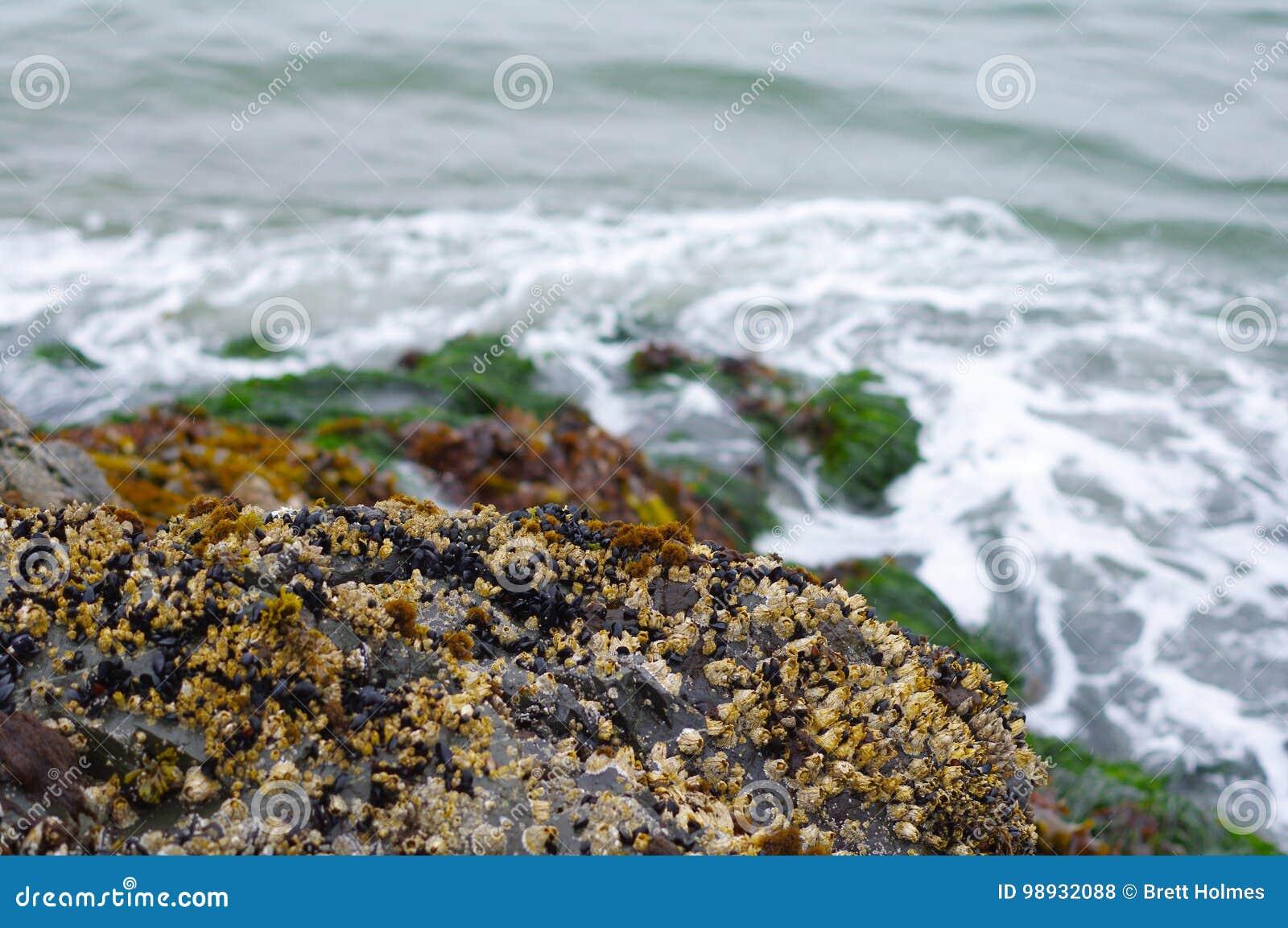 在岩石的海草临近水