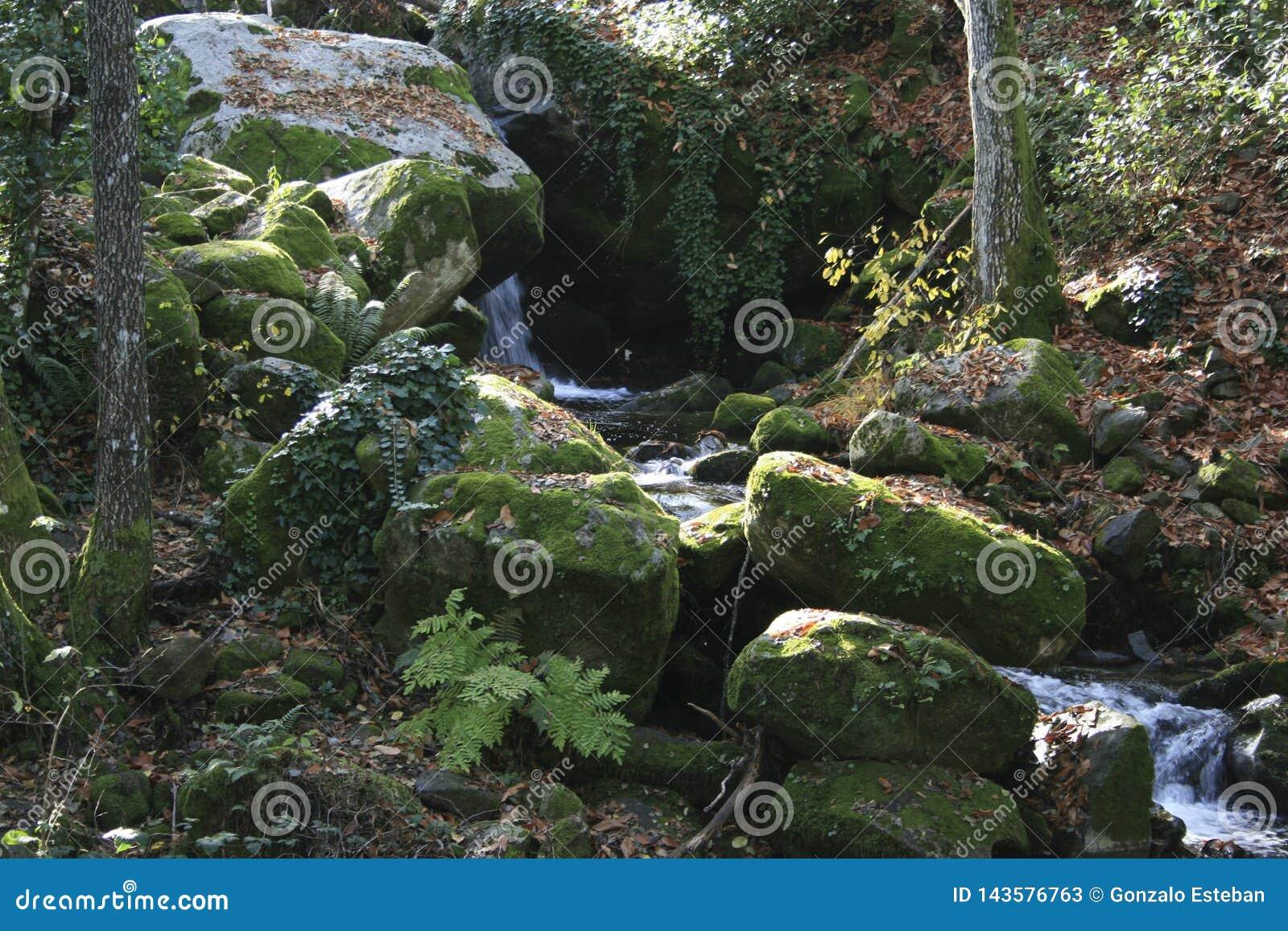在岩石的青苔