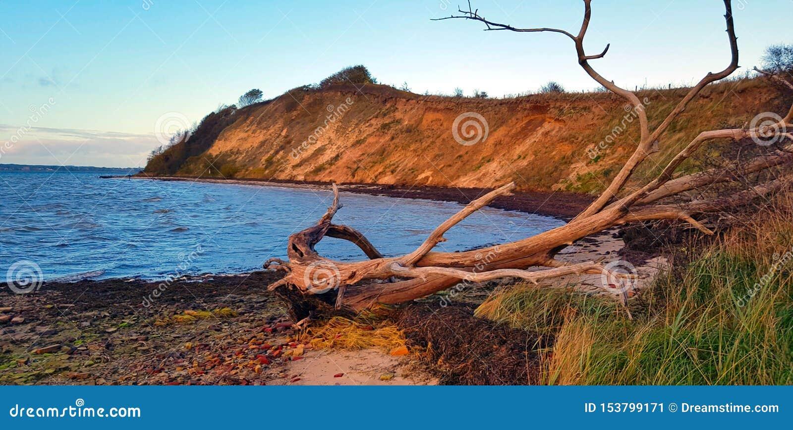 在岸的死的树