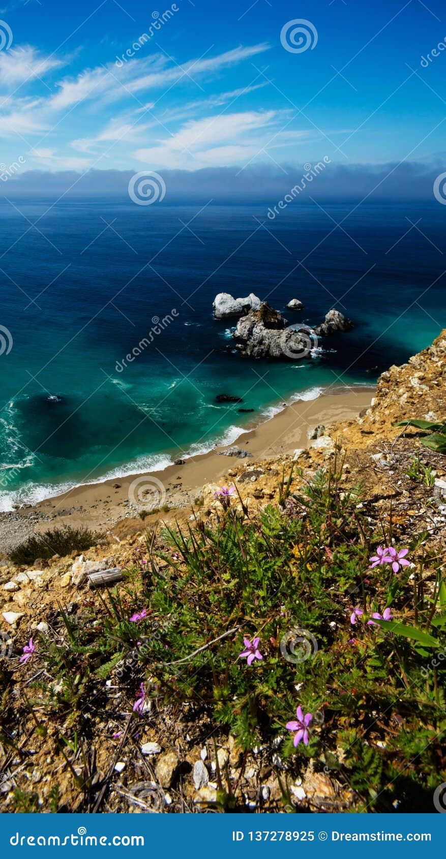 在峭壁的宏观花在太平洋在大瑟尔