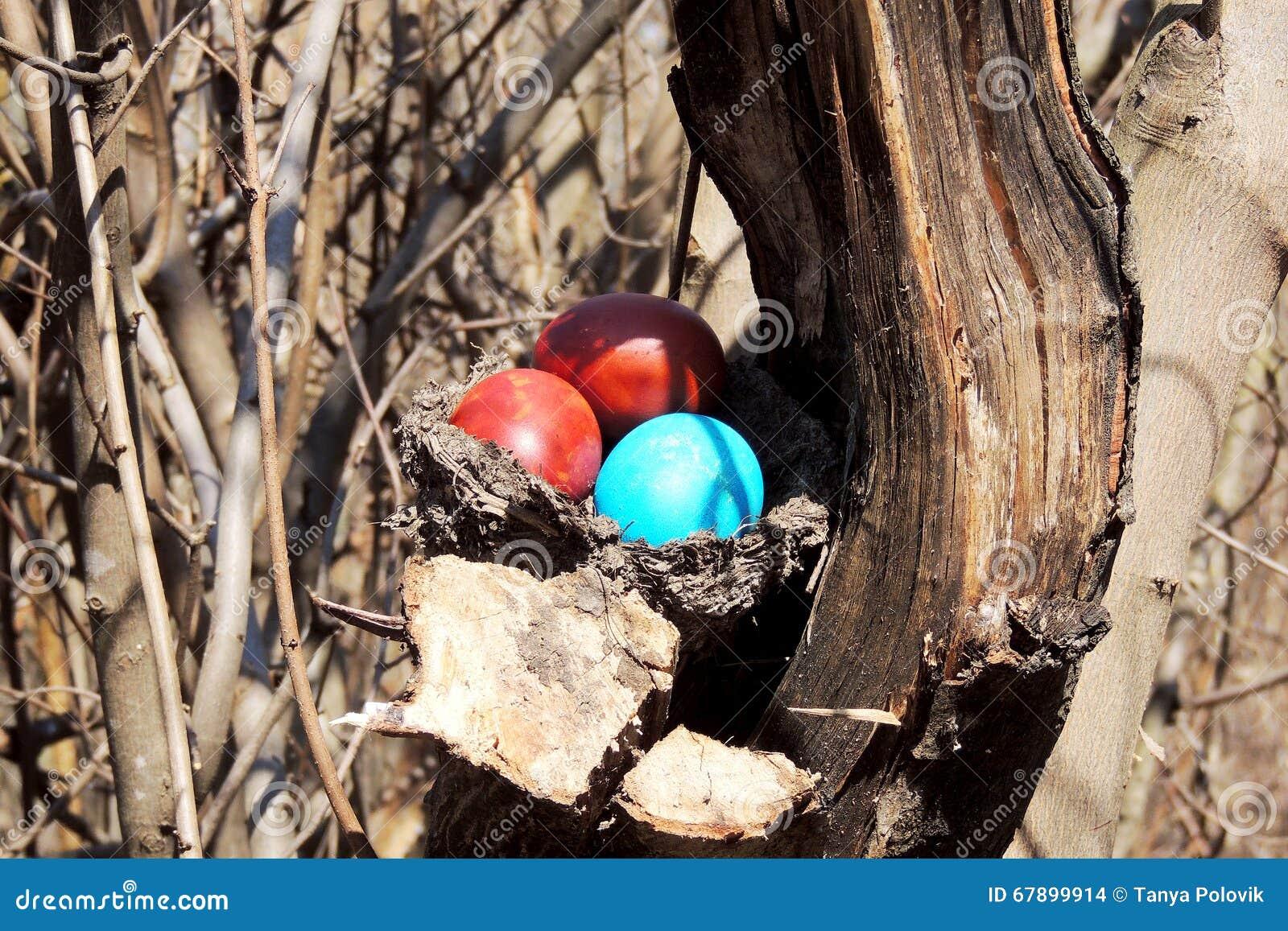 在巢的被绘的鸡蛋