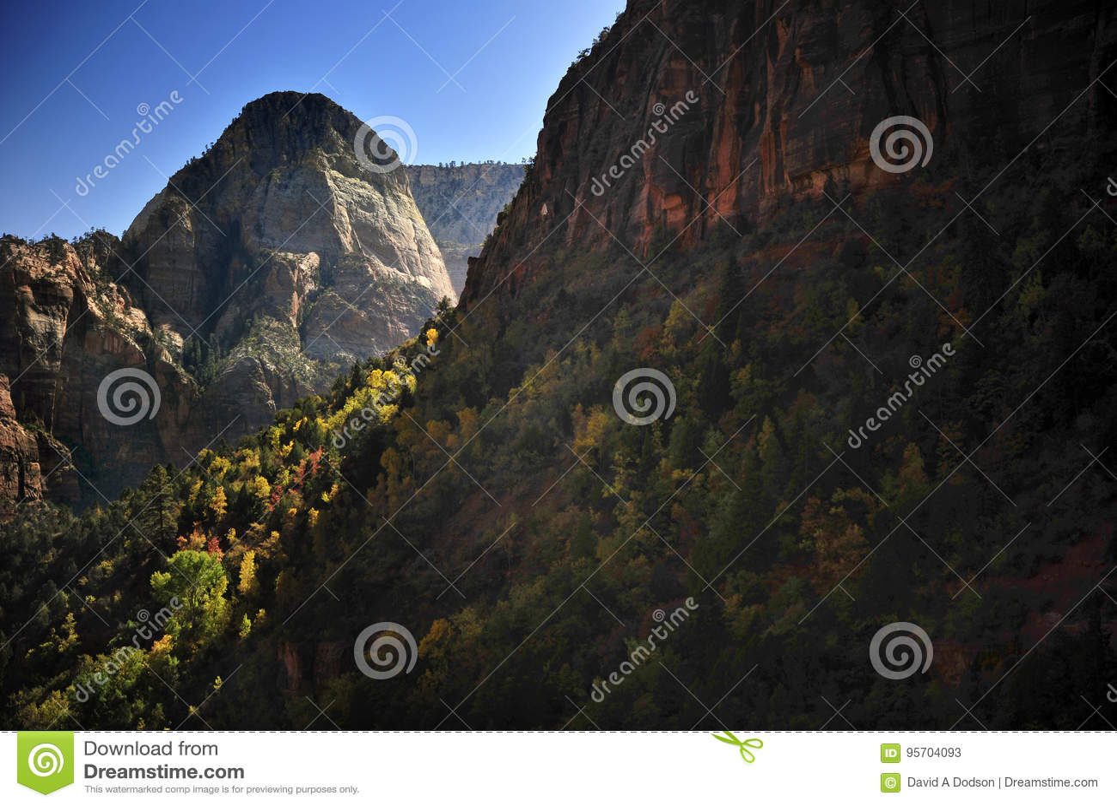 在巨型的山的秋叶在锡安国家公园