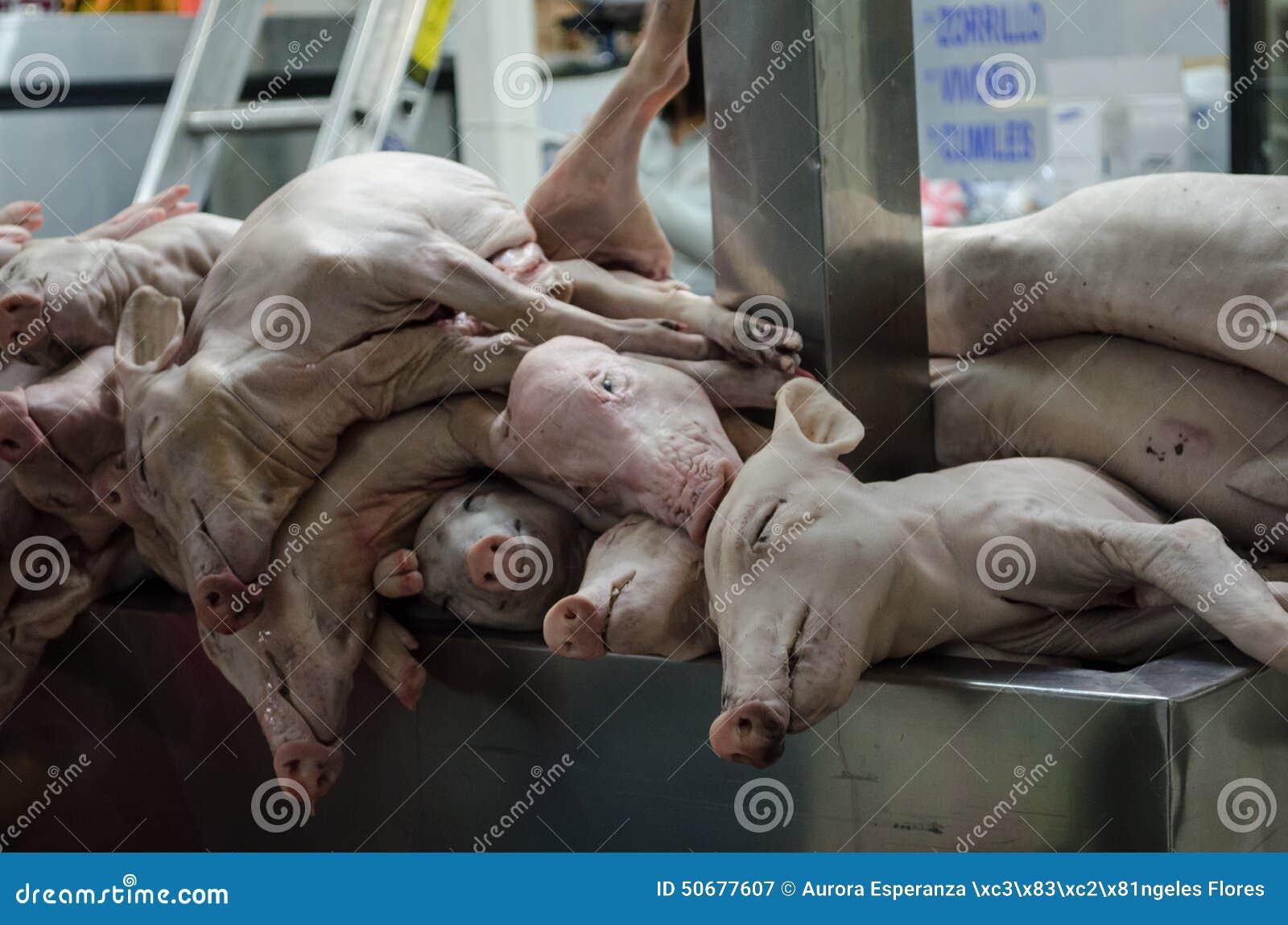 Download 在市场的Porks 库存图片. 图片 包括有 厨房, 鼻子, 屠杀, 肥胖, 水平, 尸体, 爱好健美者 - 50677607