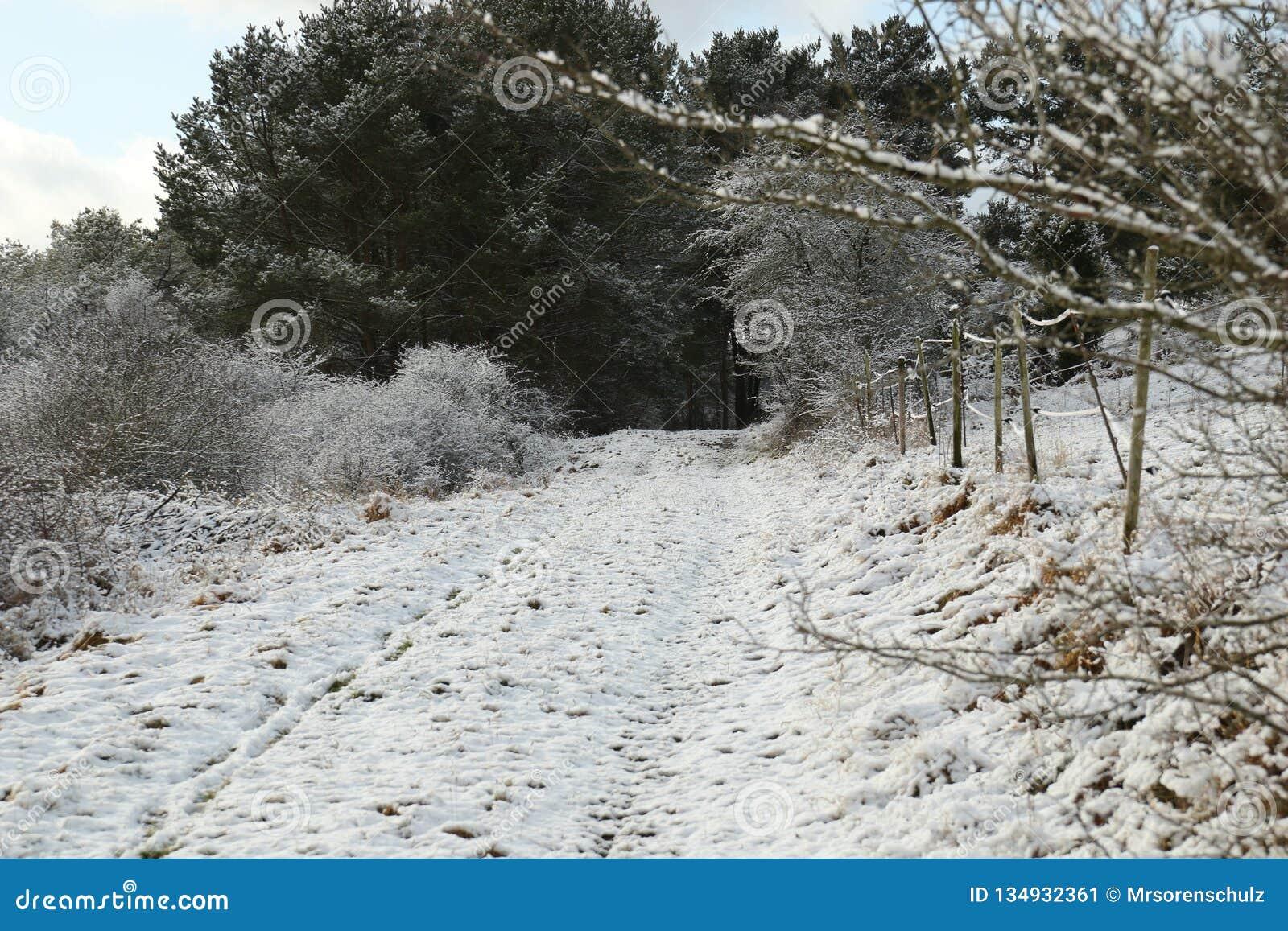 在带领入森林的土路/农场马路的雪在埃菲尔山村庄附近