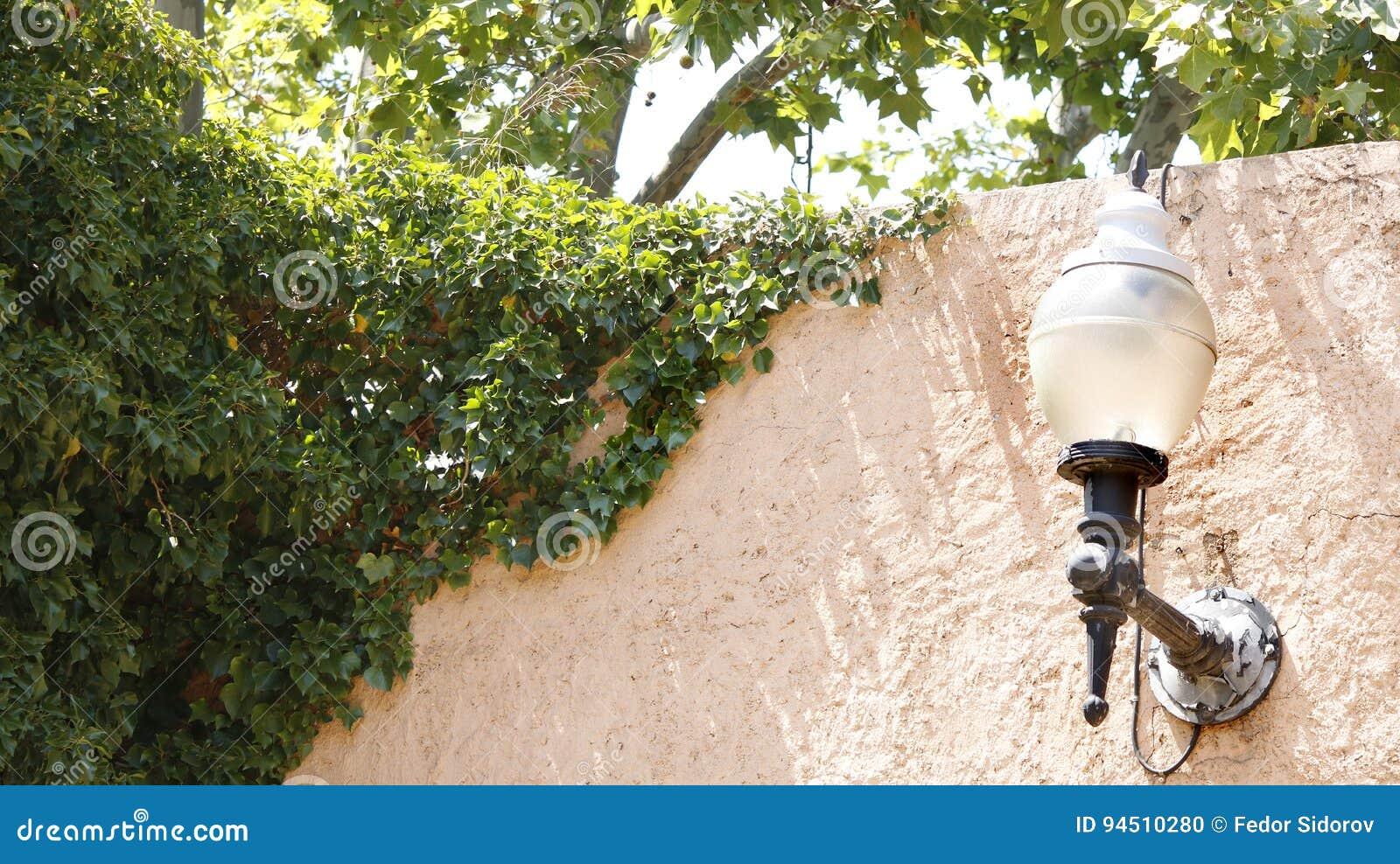 在常春藤墙壁的灯