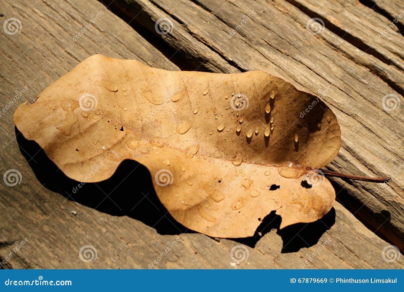 在干燥叶子的水下落