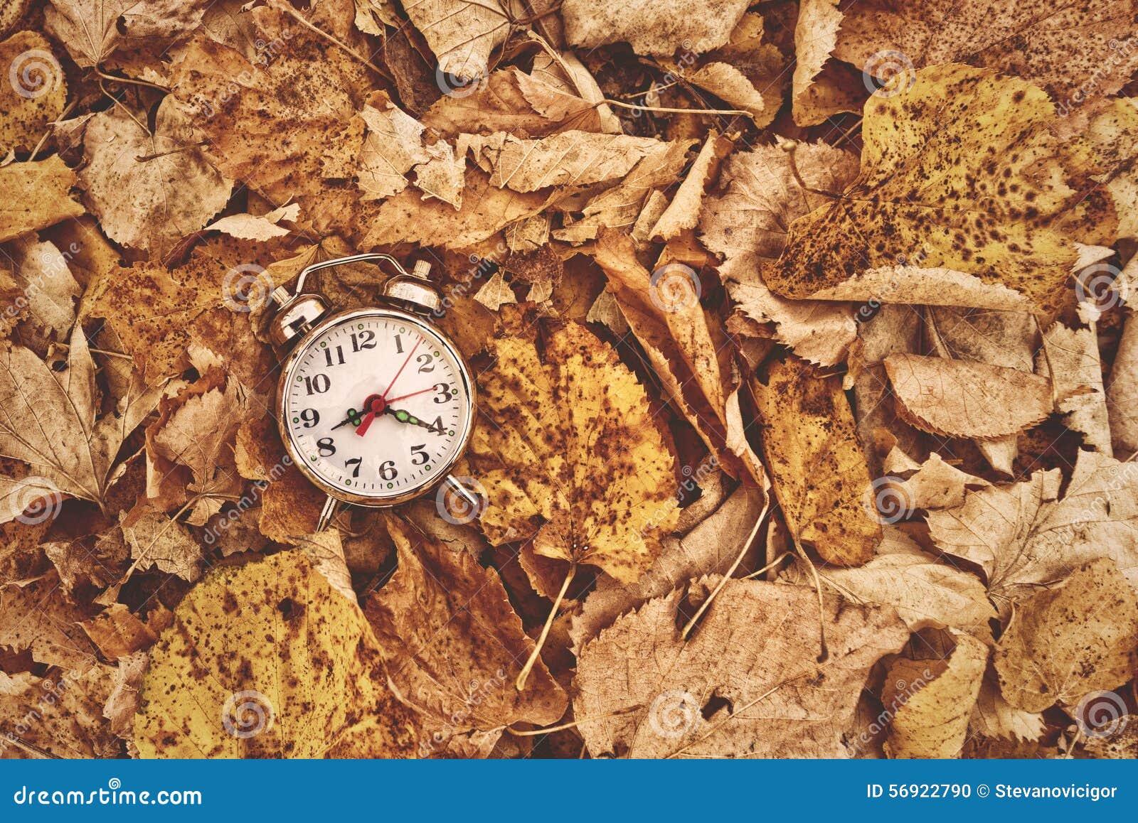 在干燥秋叶的葡萄酒闹钟