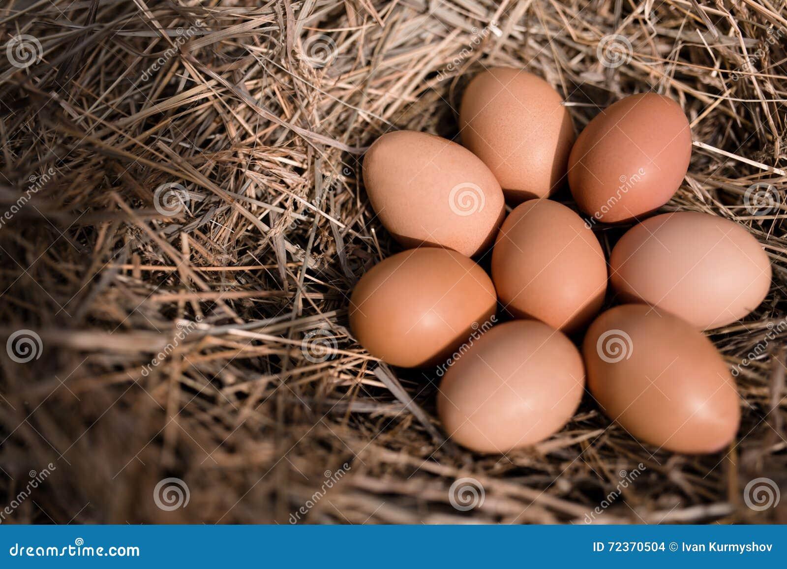 在干草巢的鸡鸡蛋