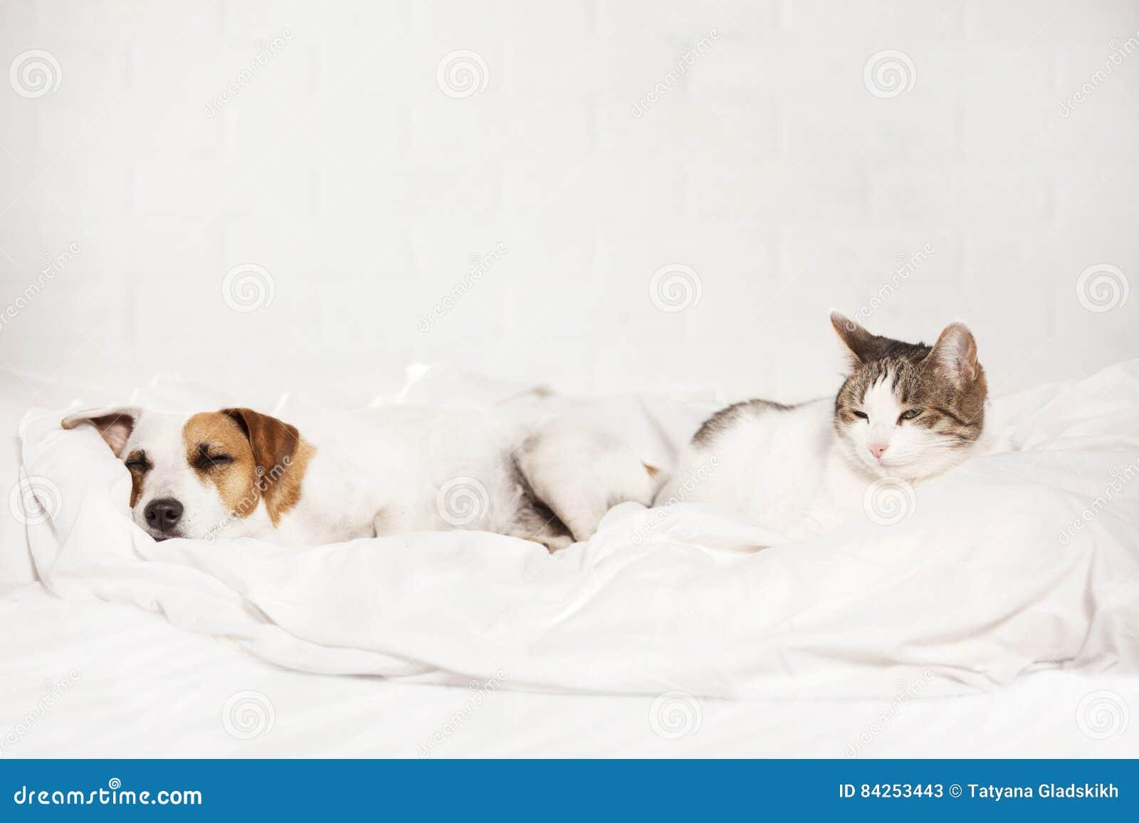 在床上的睡觉宠物