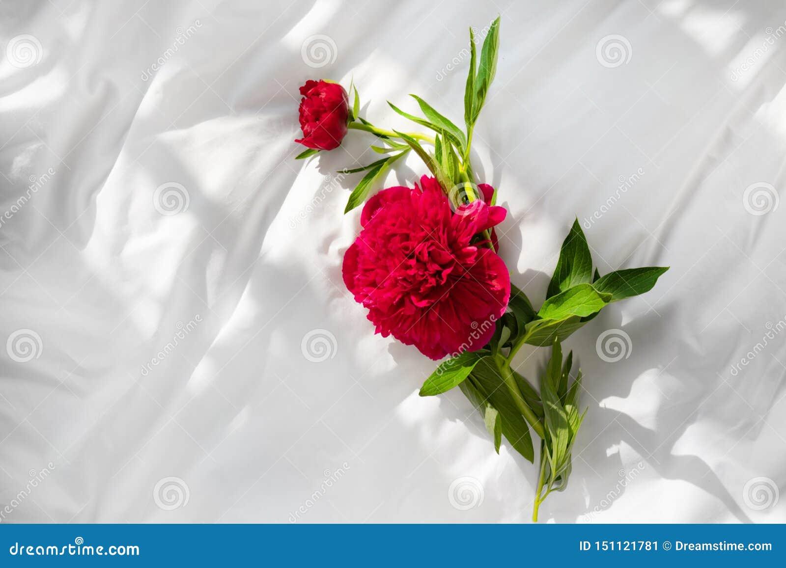 在床上的红色牡丹花