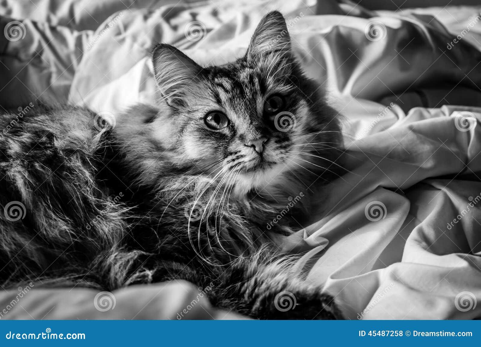 在床(B&W)上的猫