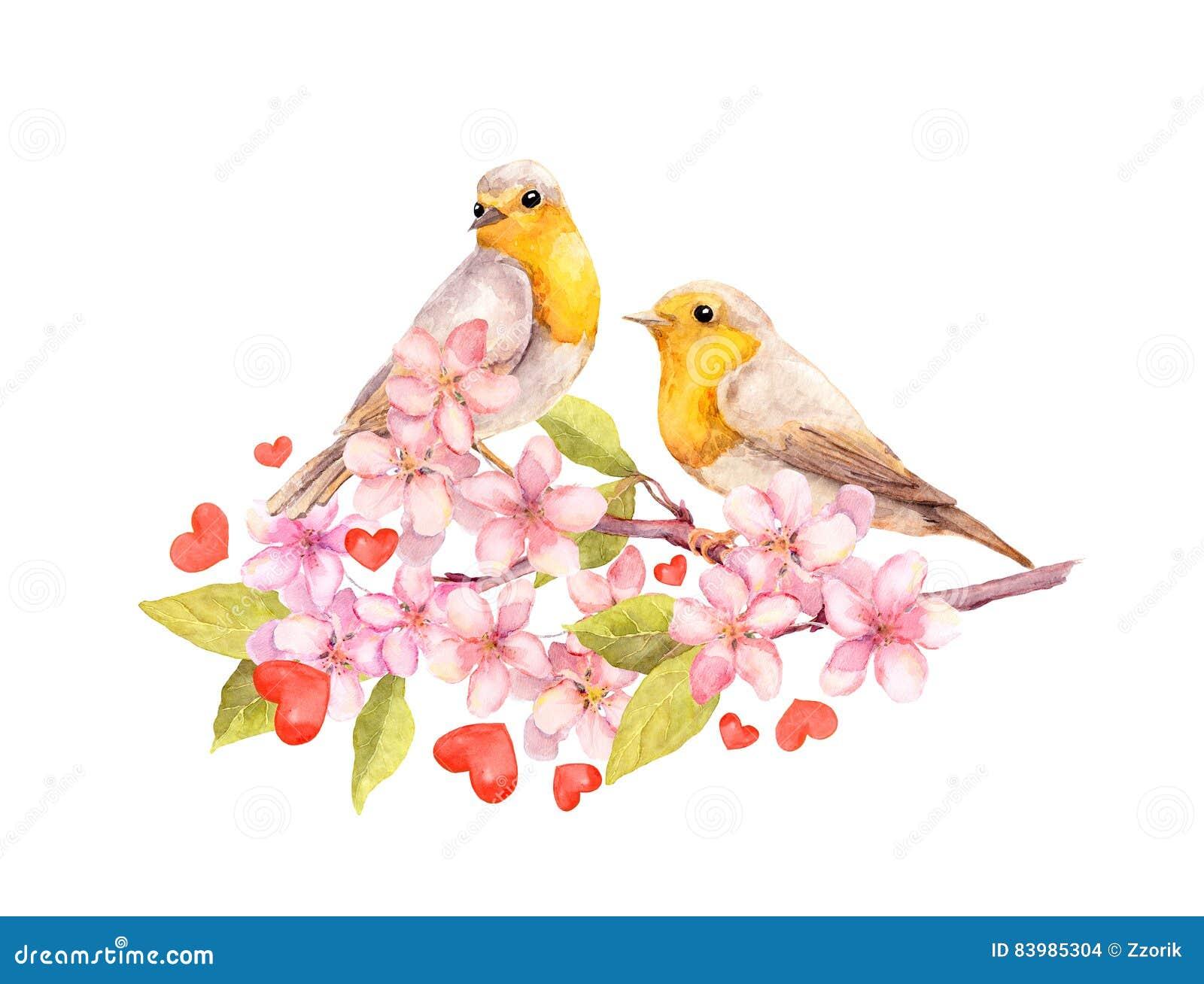 在开花分支的鸟与花 水彩