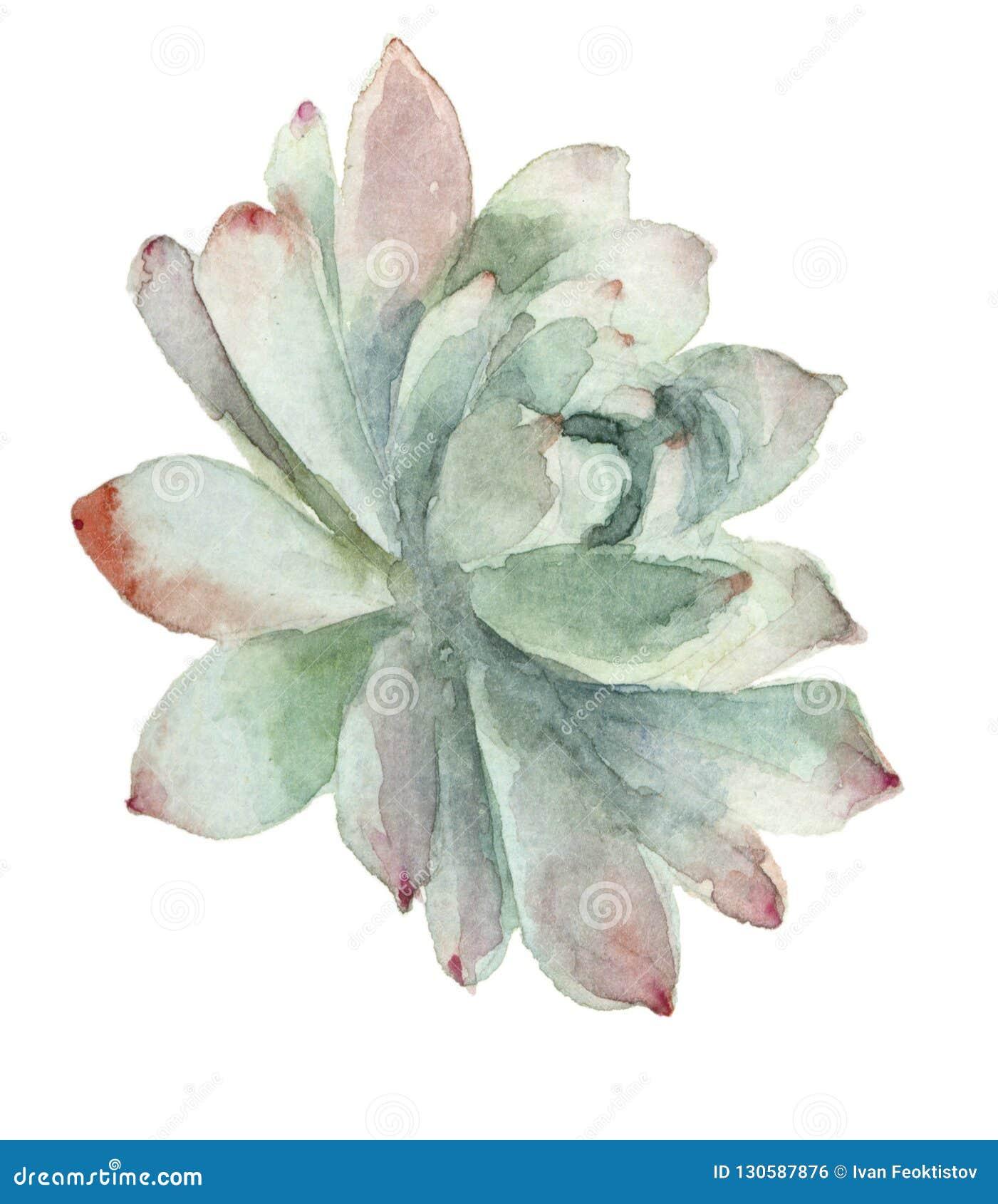在开花的仙人掌