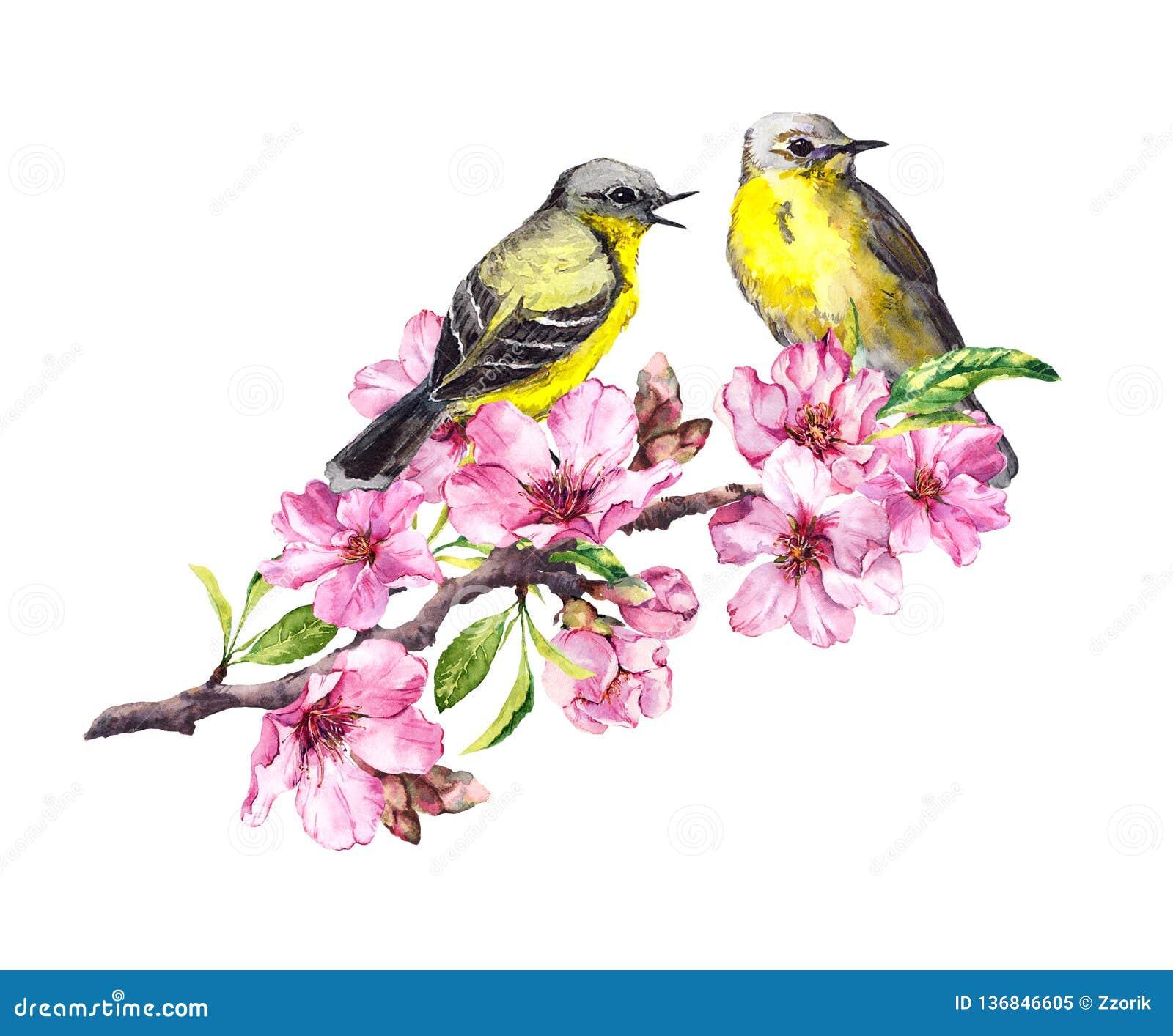 在开花苹果,在桃红色花的樱桃分支的两只鸟 与鸟夫妇的水彩开花的树