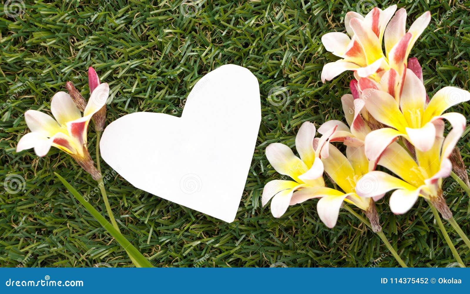 在心脏形状的空白的笔记,与花