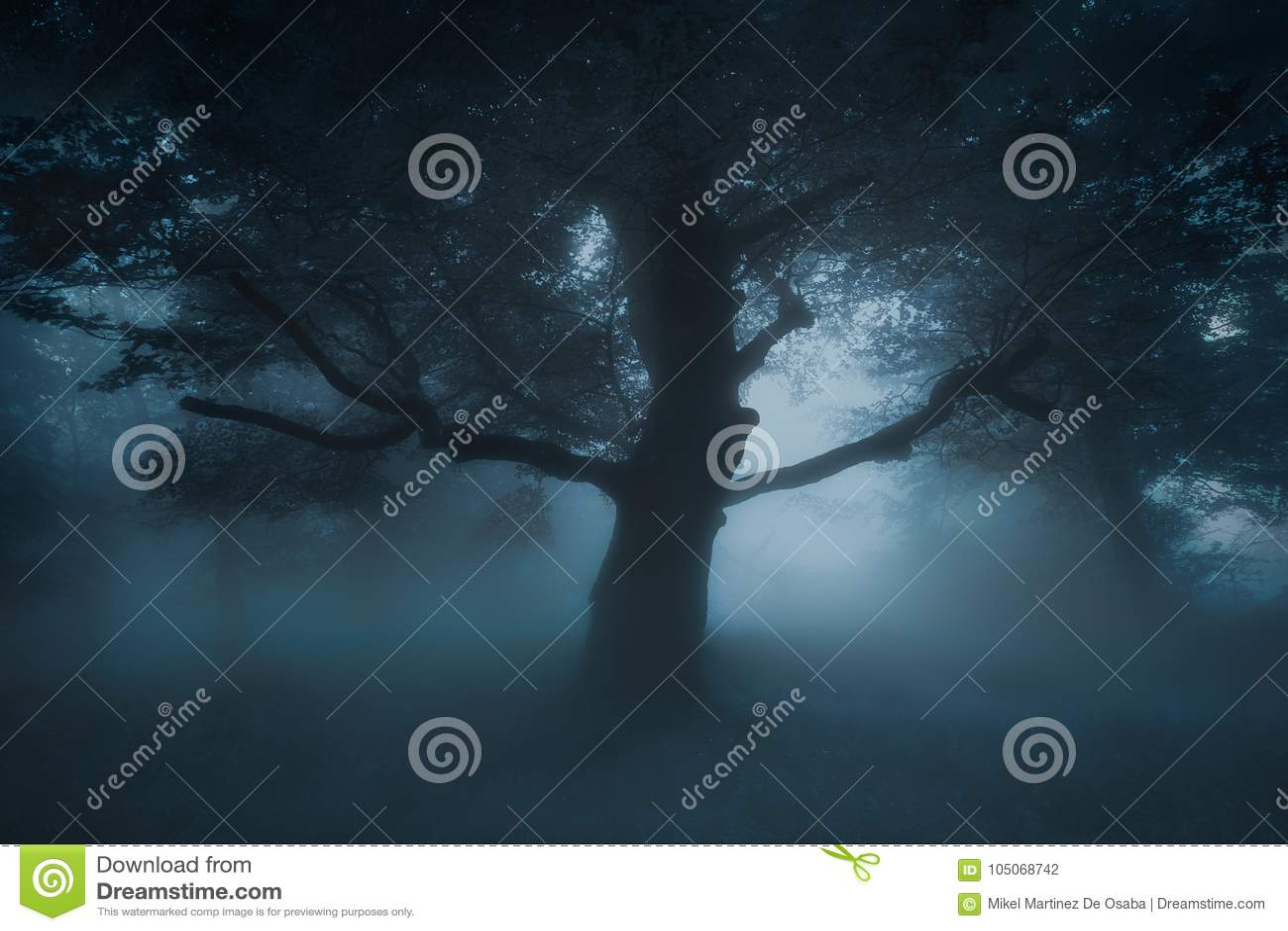 Download 在恶梦森林的可怕蠕动的树 库存照片. 图片 包括有 奥秘, 地图集, 森林, alina, 幻想, 有雾 - 105068742