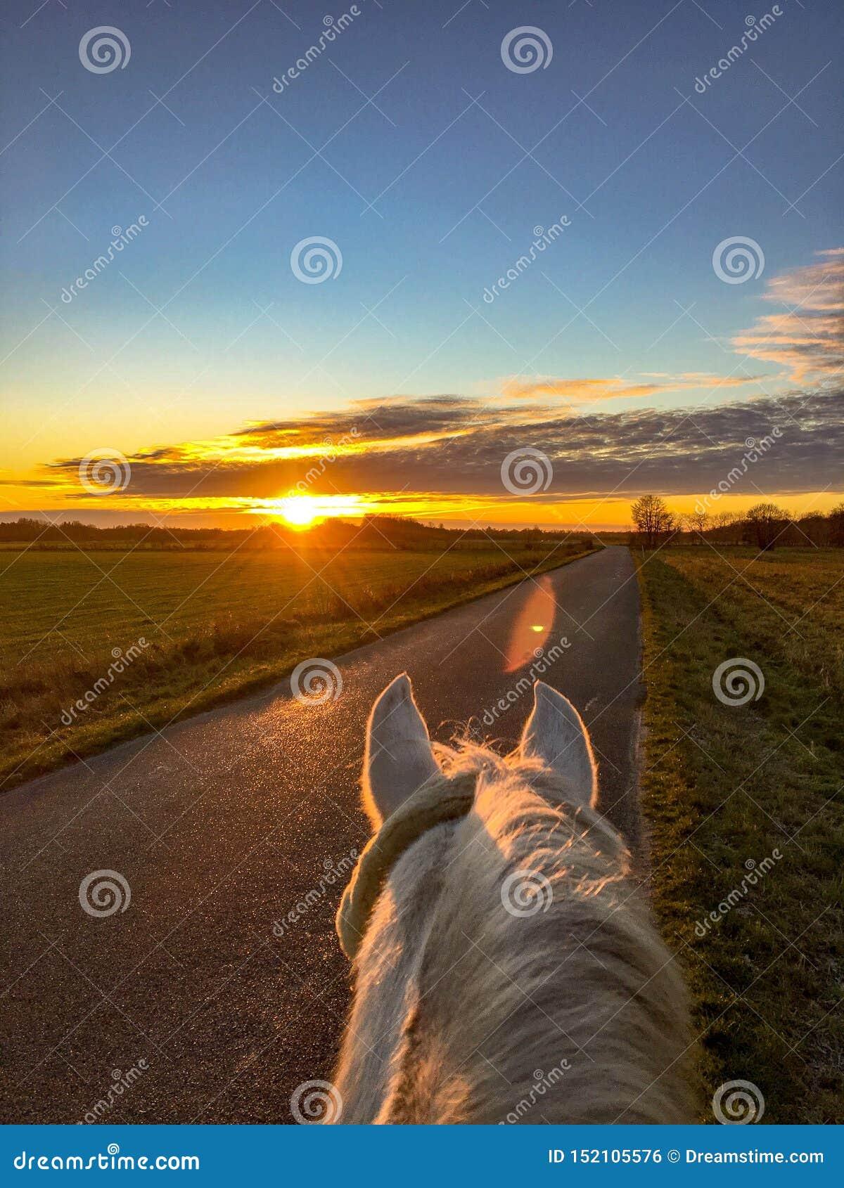 在我的马的美好的早晨乘驾