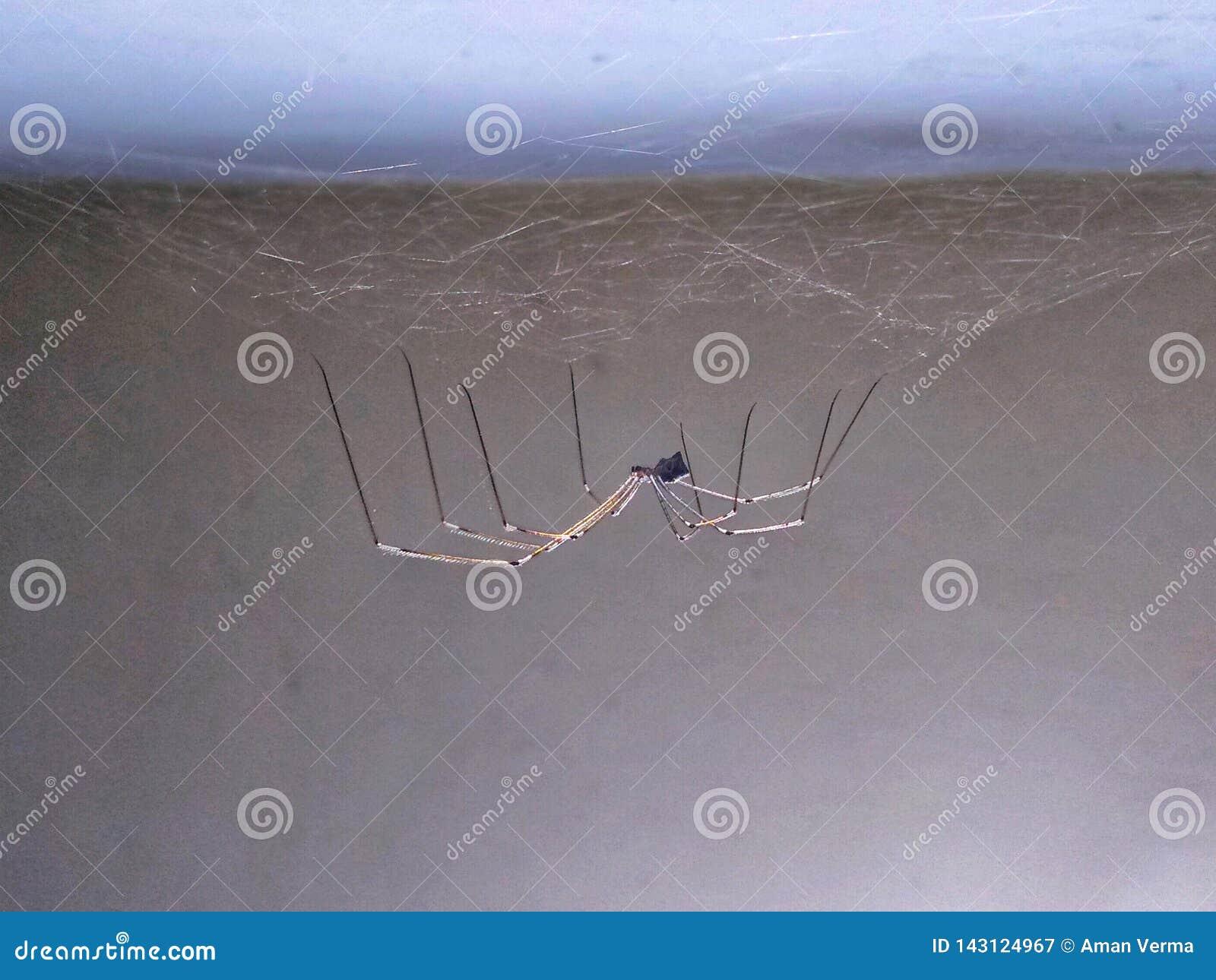在房子里面的蜘蛛