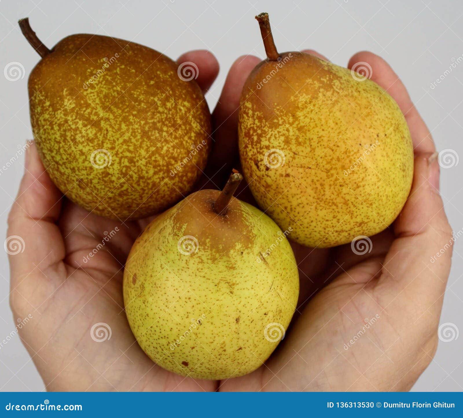 在手上举行的束梨