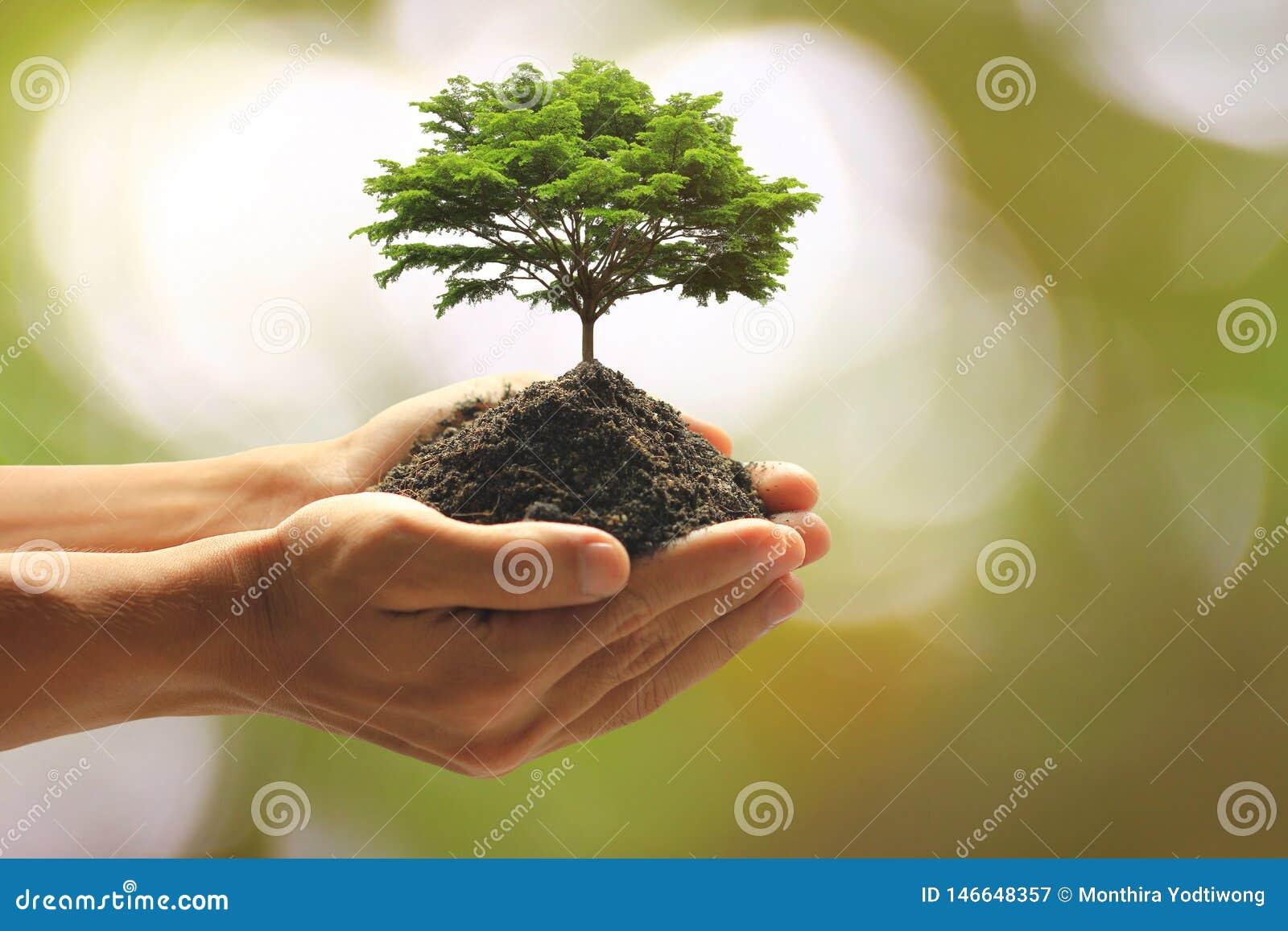 在手中拿着绿色植物的人的关闭