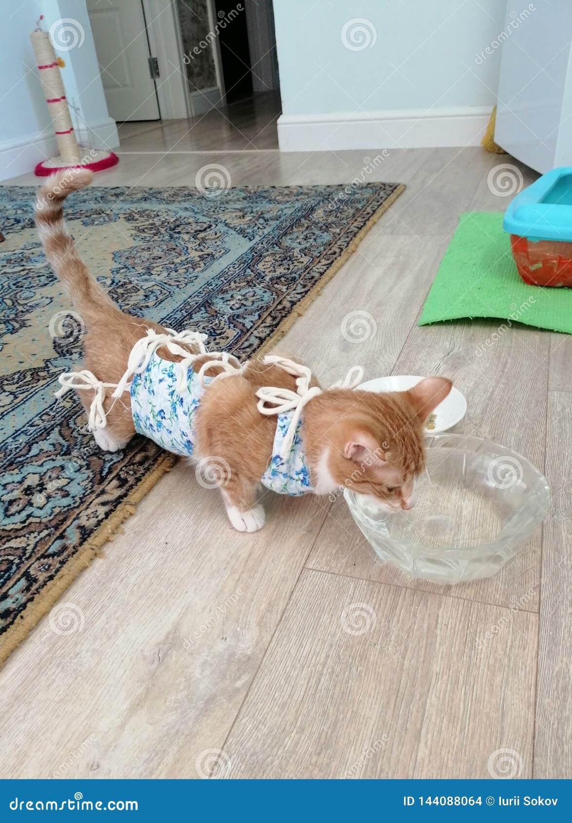 在手术饮用水以后的猫