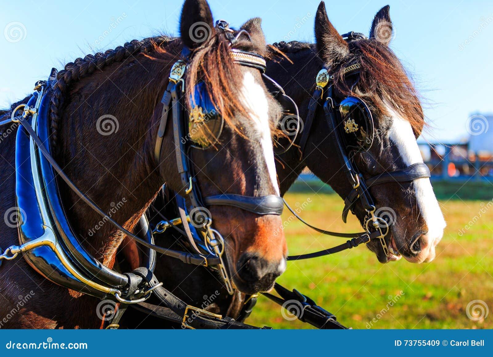 在支架展示的马与马眼罩