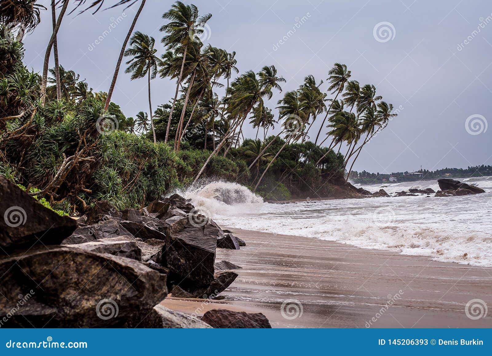 在斯里兰卡的多岩石的海滩的一场小风暴 在狂放的海滩的波浪 印度洋的棕榈树丛