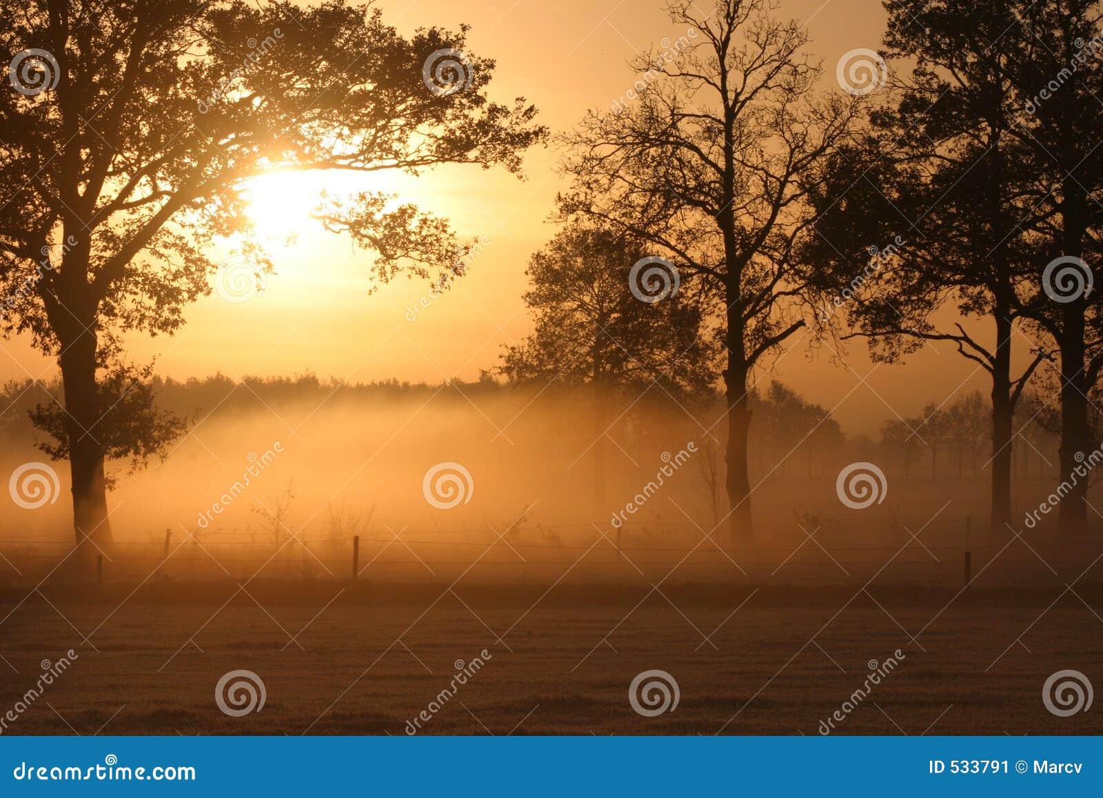 Download 在日出的有雾的草甸 库存图片. 图片 包括有 荷兰, beautifuler, 日出, 薄雾, 橙色, 平静 - 533791