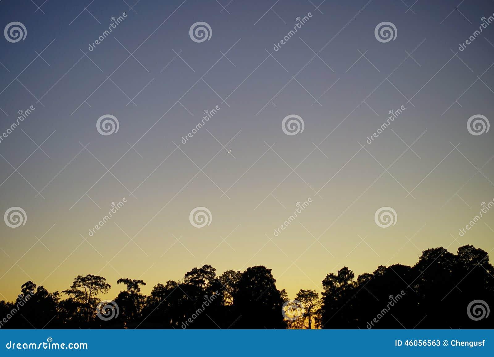 在日落和树的美丽的新月
