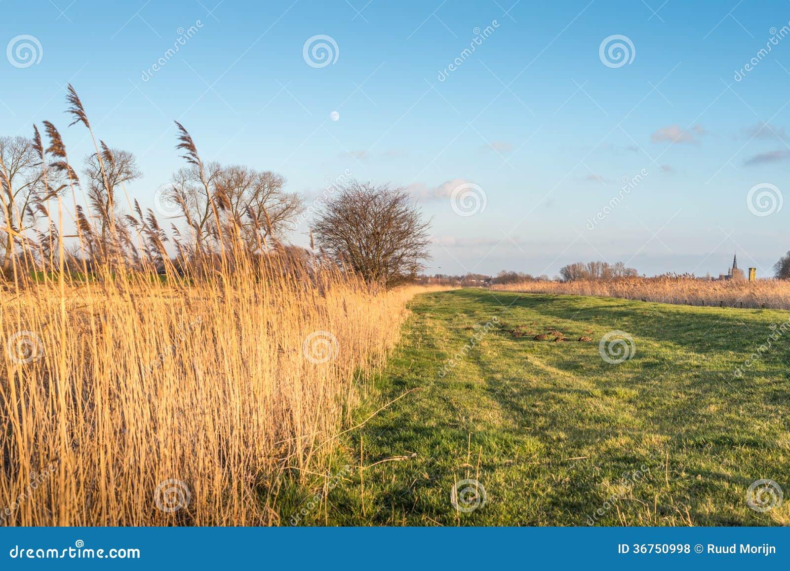 在日落期间的典型的荷兰风景