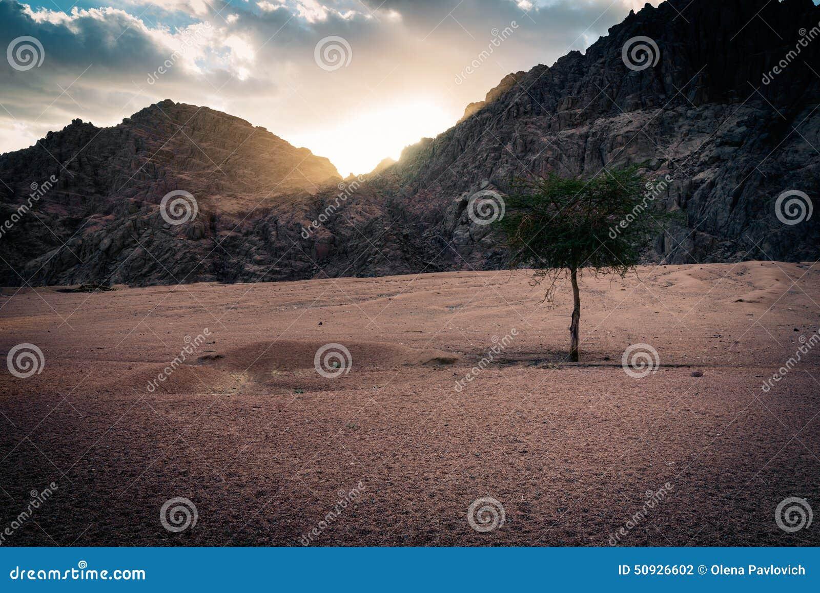 在日落的唯一树,埃及