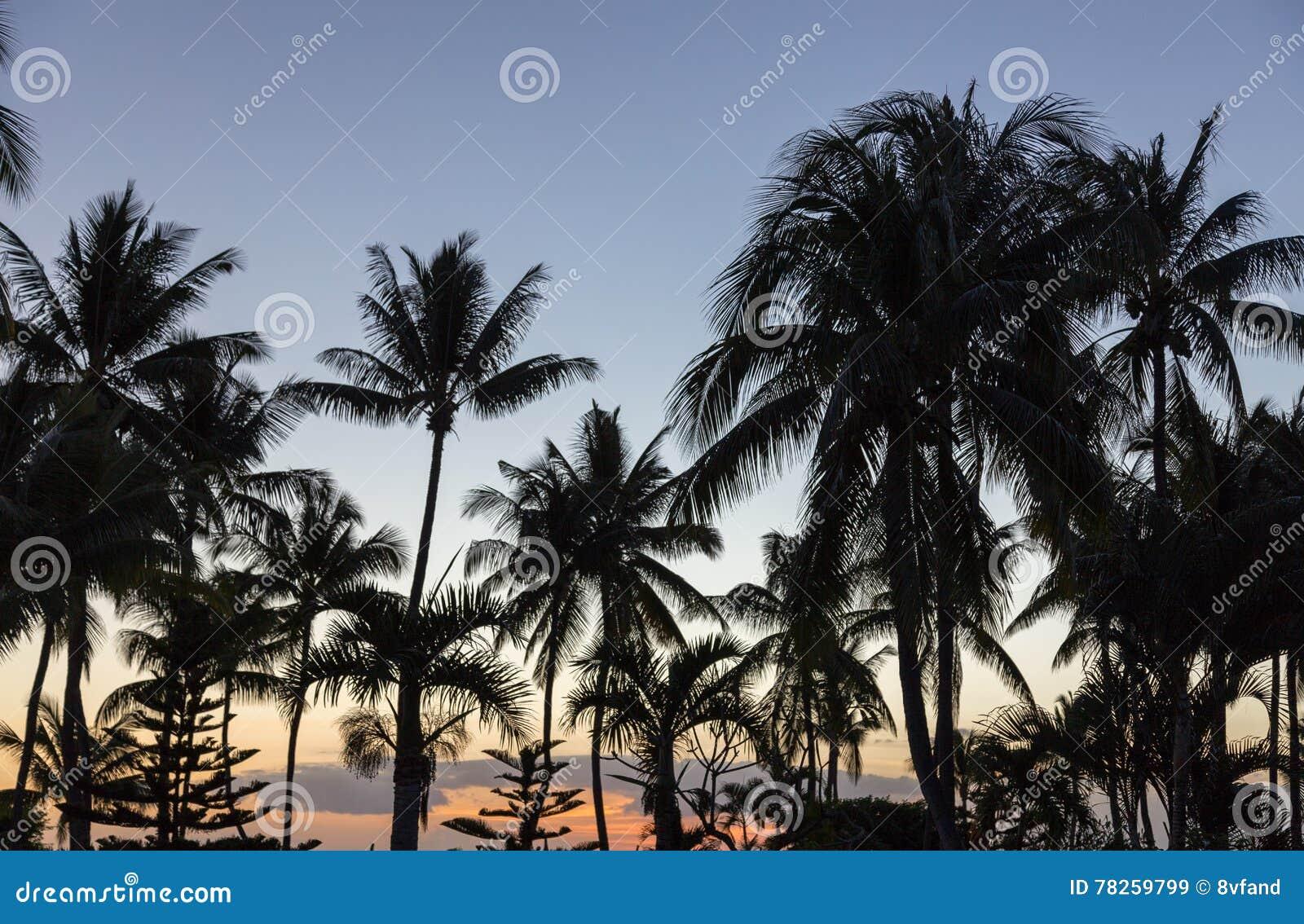 在日落的棕榈树在毛里求斯