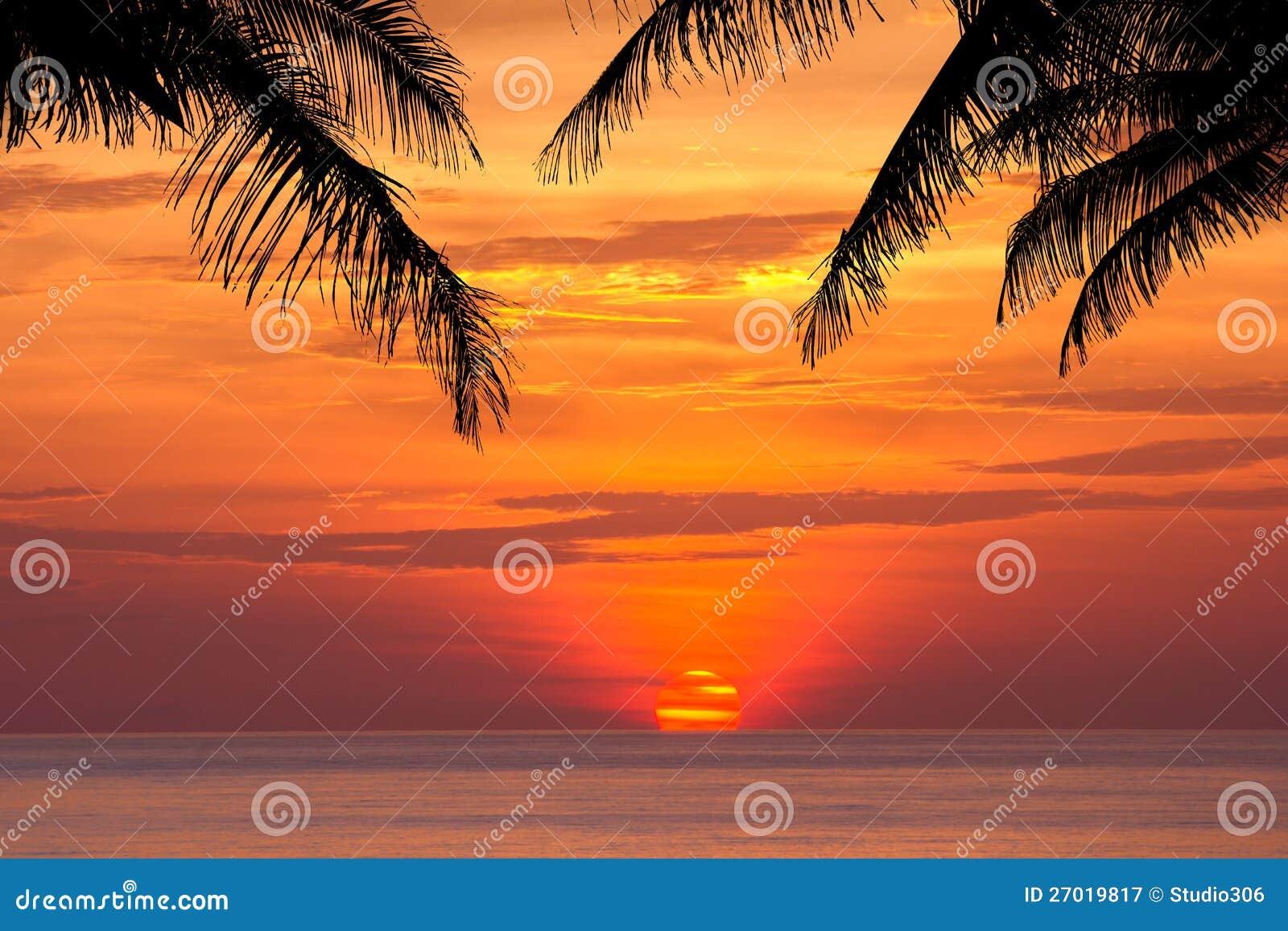 在日落的椰子树剪影