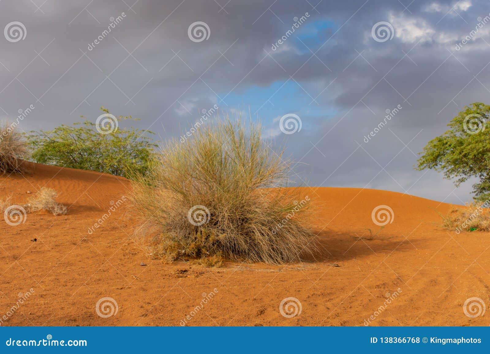 在日落的橙色沙丘与风雨如磐的云彩和天空蔚蓝背景