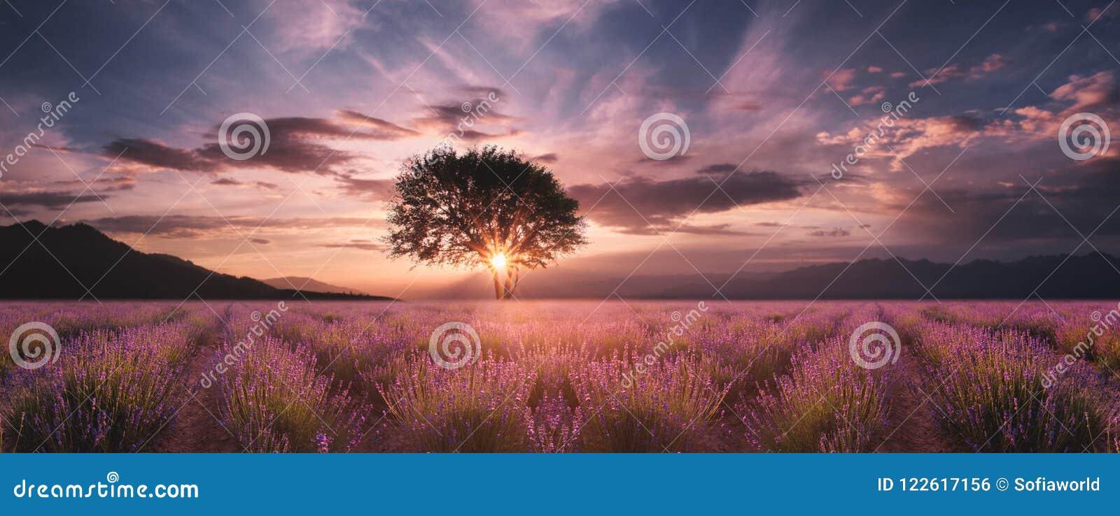 在日落的淡紫色领域