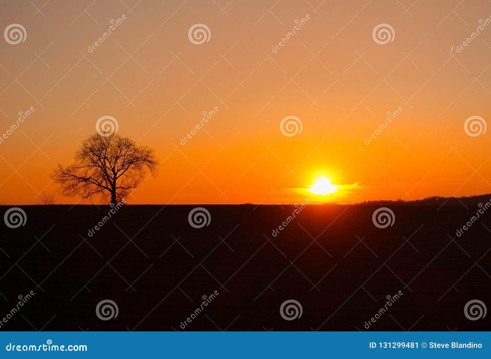 在日落的由后面照的树