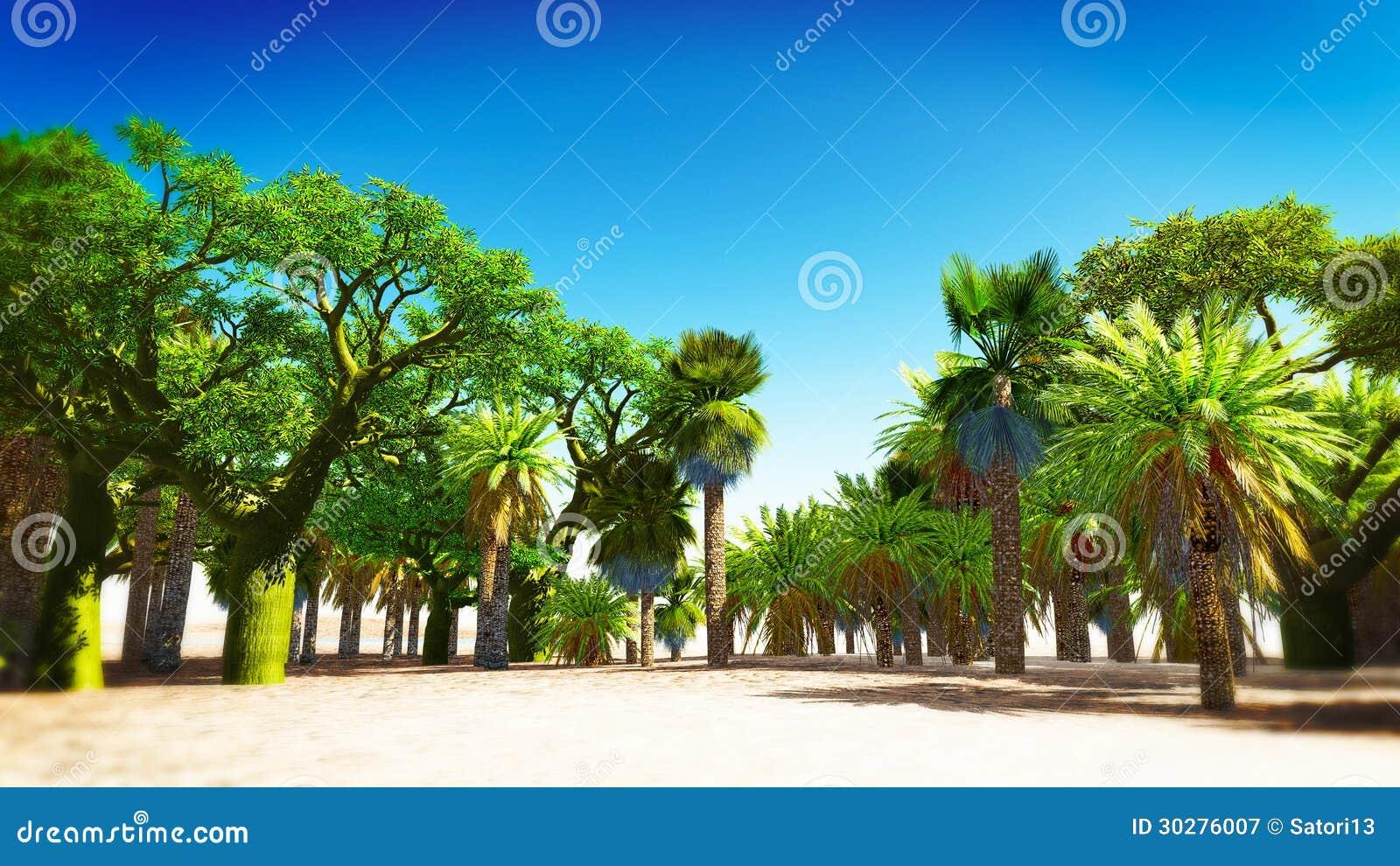 绿洲在摩洛哥