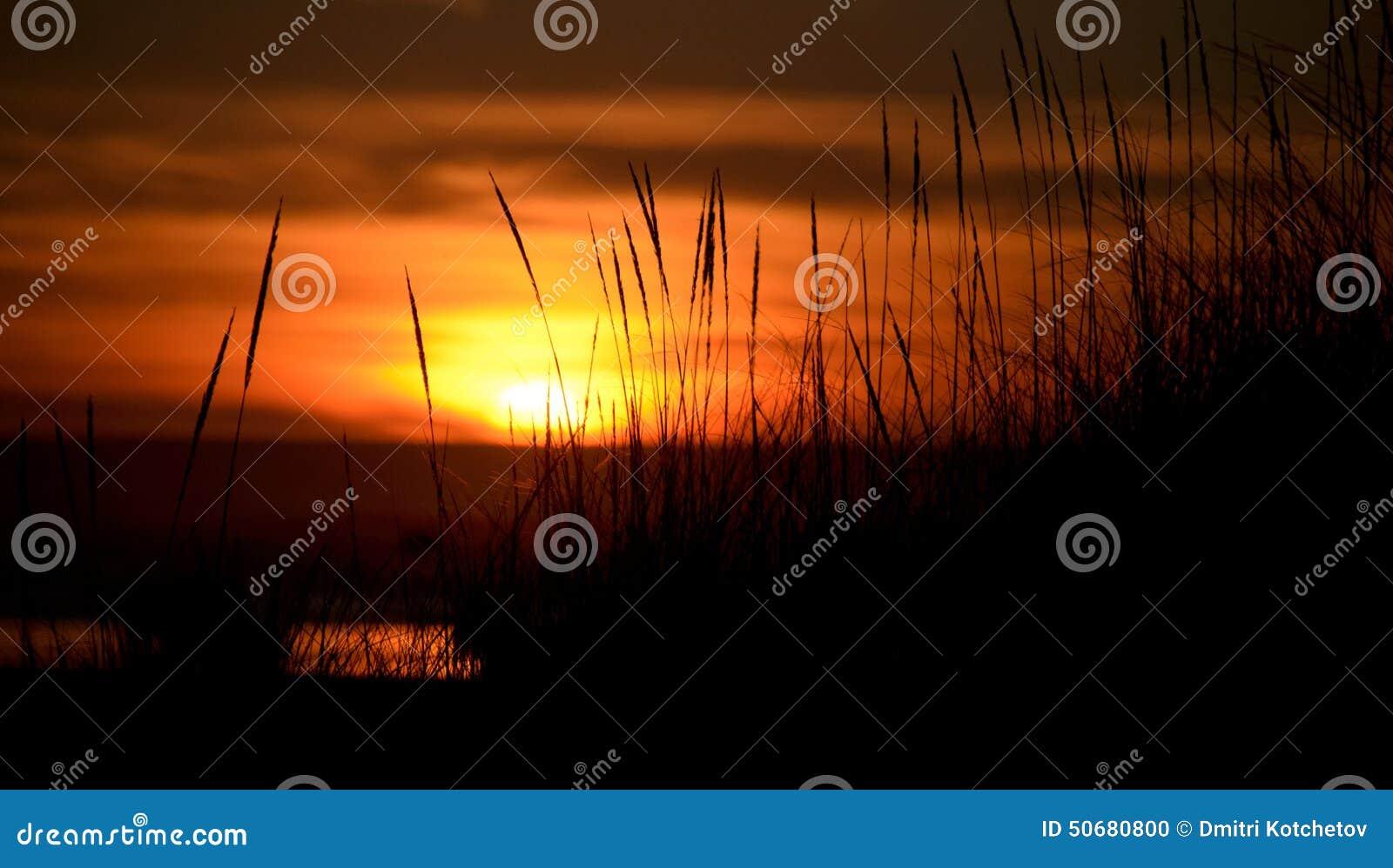 Download 在日落突出的沙丘的高草 库存照片. 图片 包括有 户外, 和平, 远足者, 火箭筒, 土坎, 小山, 海洋 - 50680800