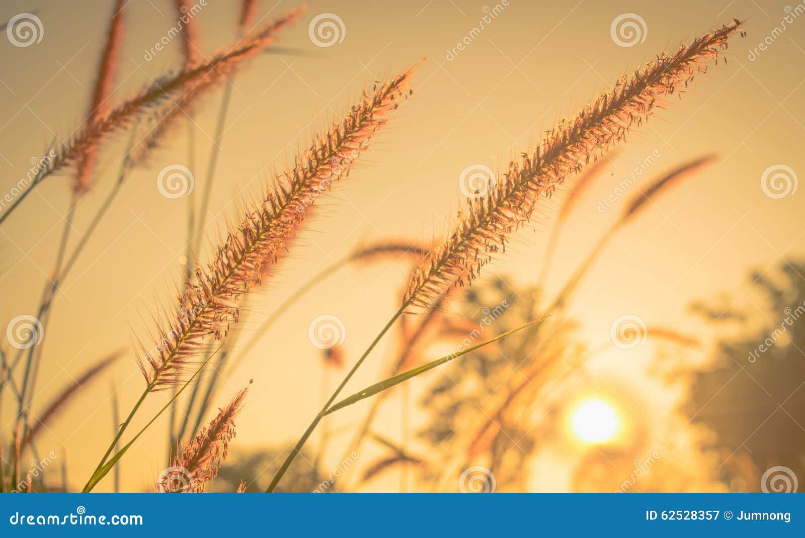 在早晨的花草