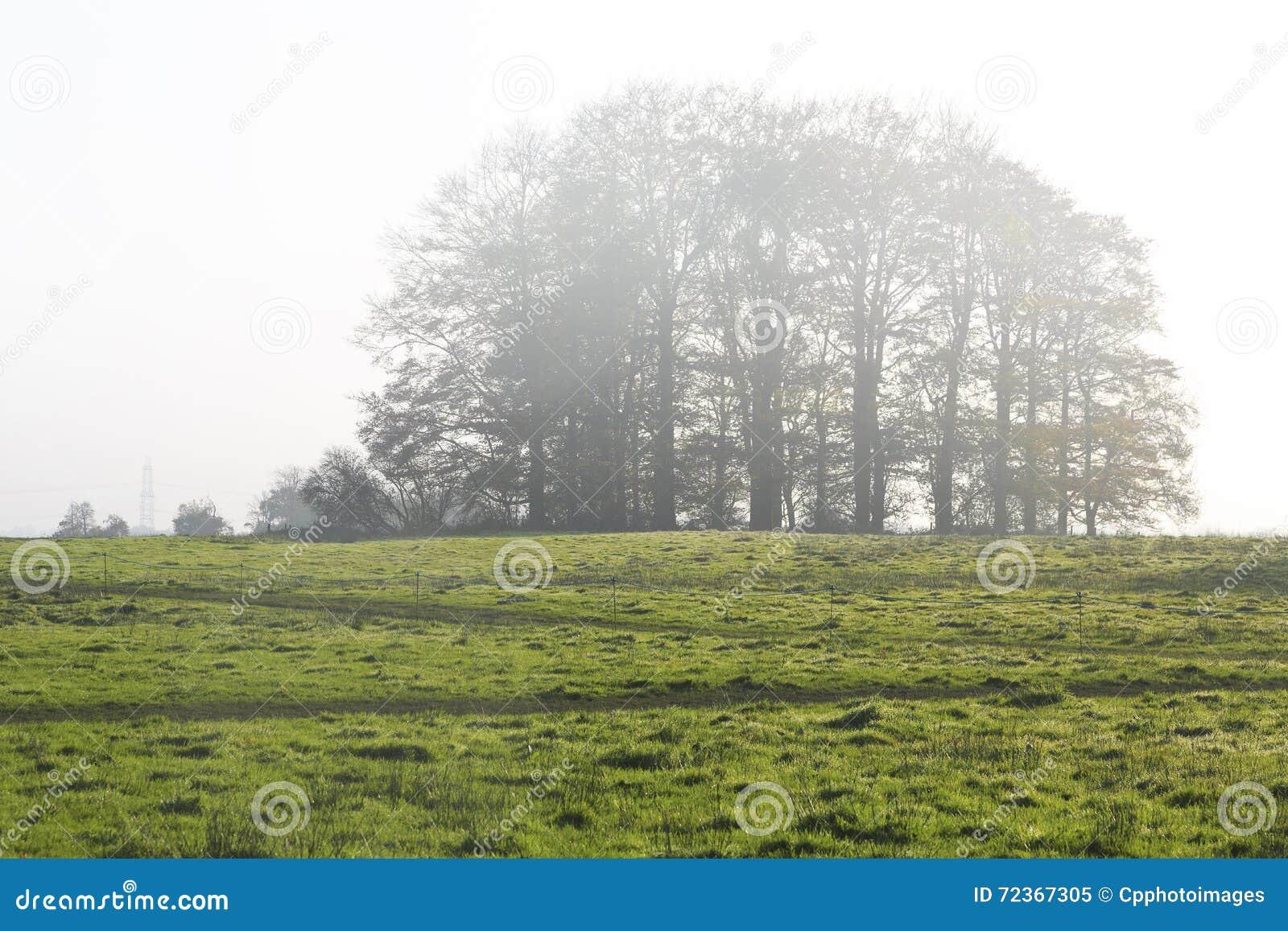 在早晨薄雾的结构树