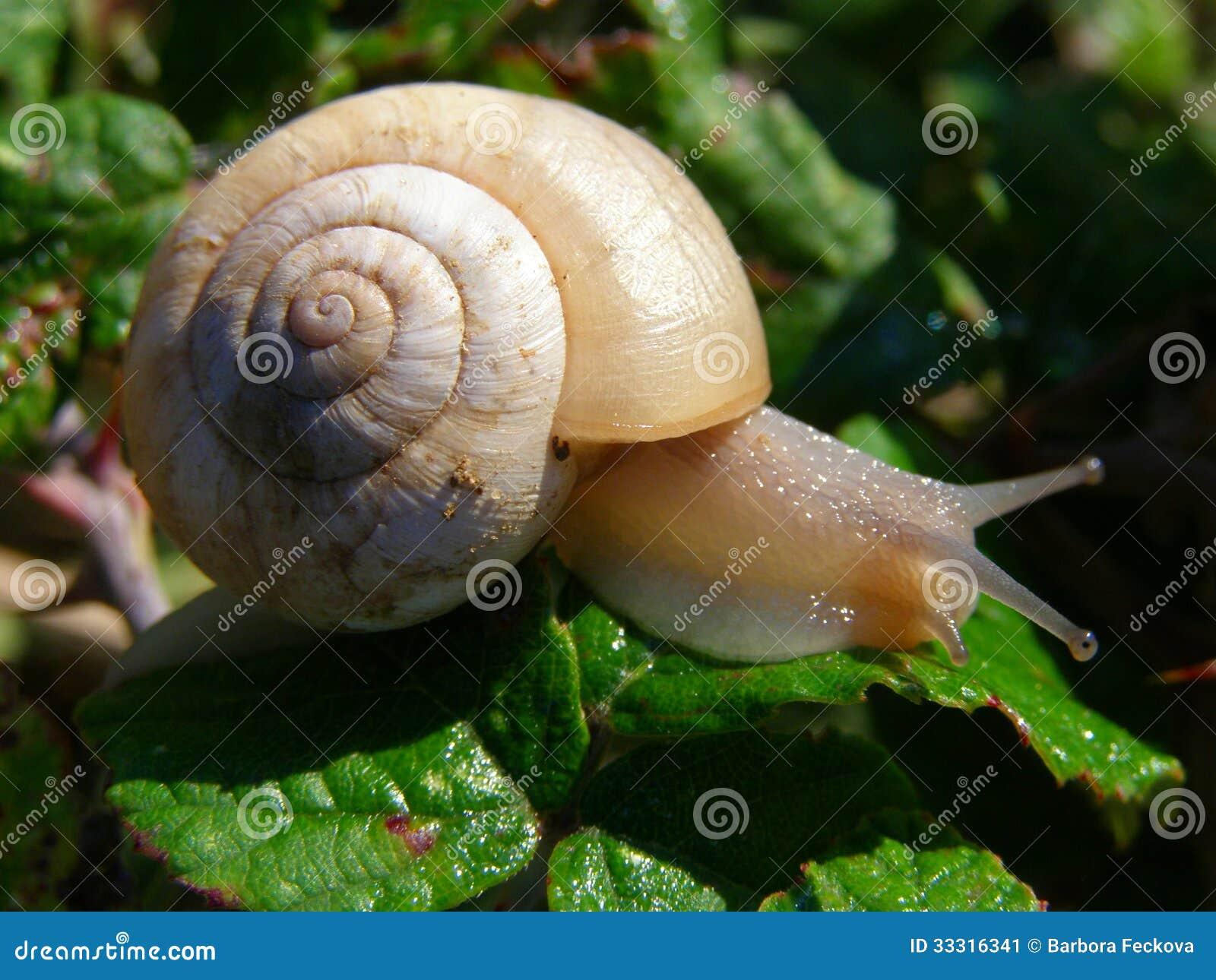 在早晨细节的蜗牛