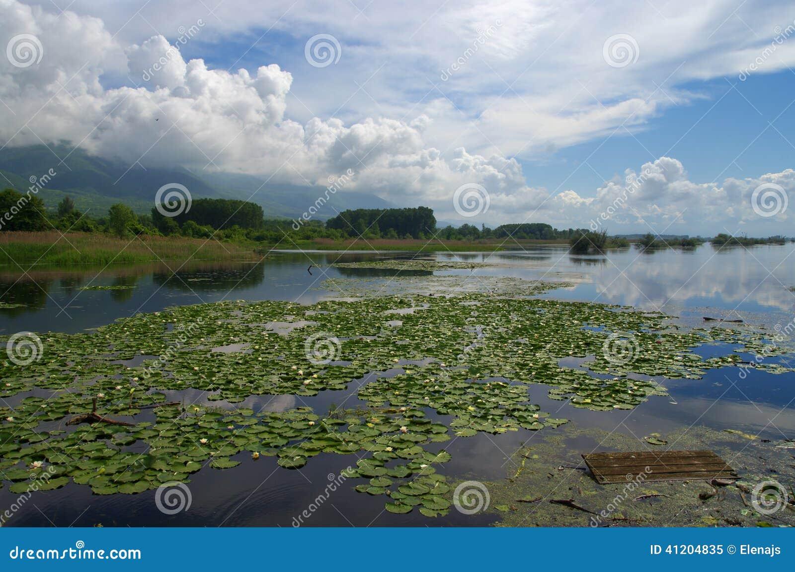 在早期的春天期间的Kerkini湖有荷花的