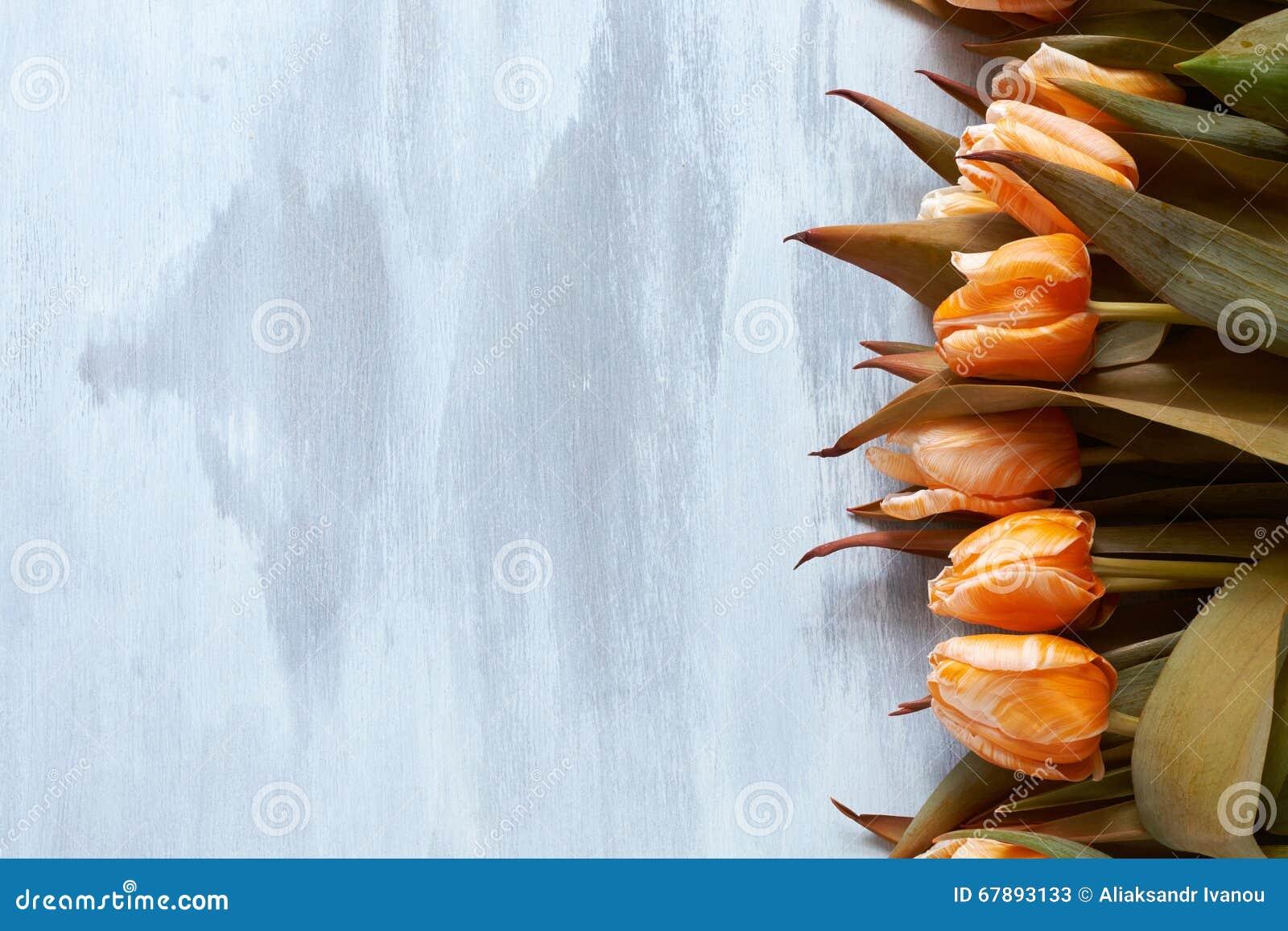 在明亮的木背景的美丽的橙色郁金香