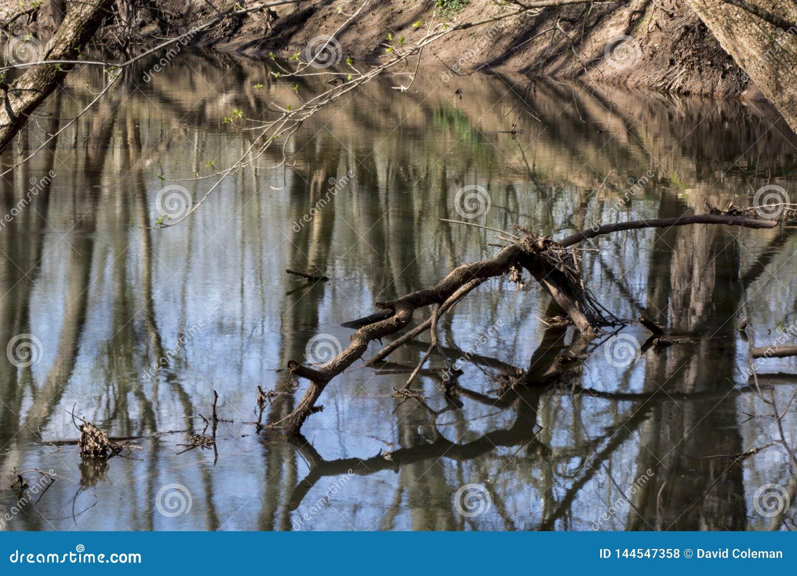在春天小河的下落的肢体