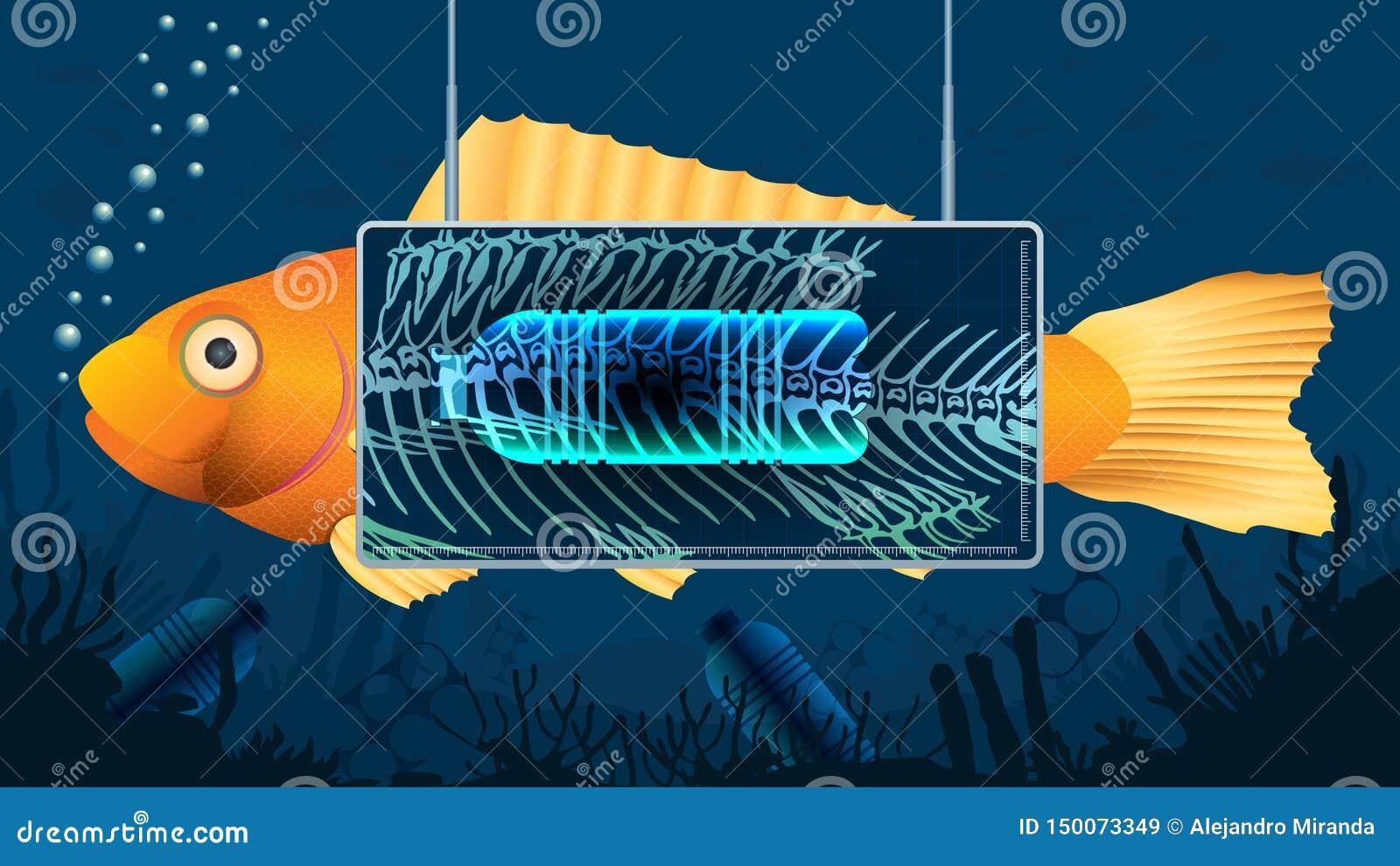 在显示在鱼的胃里面的X-射线屏幕后的金鱼塑料瓶在污染的蓝色水下的背景