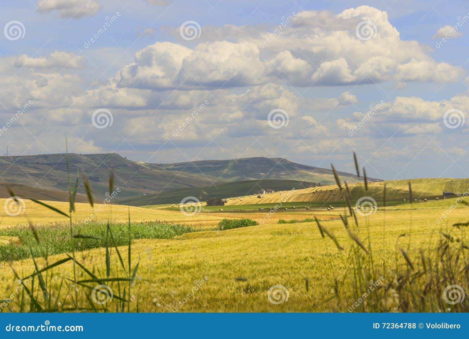 在普利亚和巴斯利卡塔之间 与玉米田的多小山风景 意大利