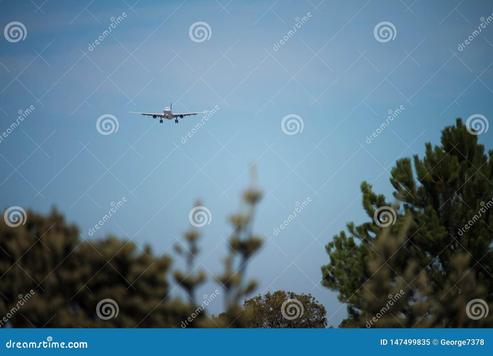 在最后渐近的飞机在树
