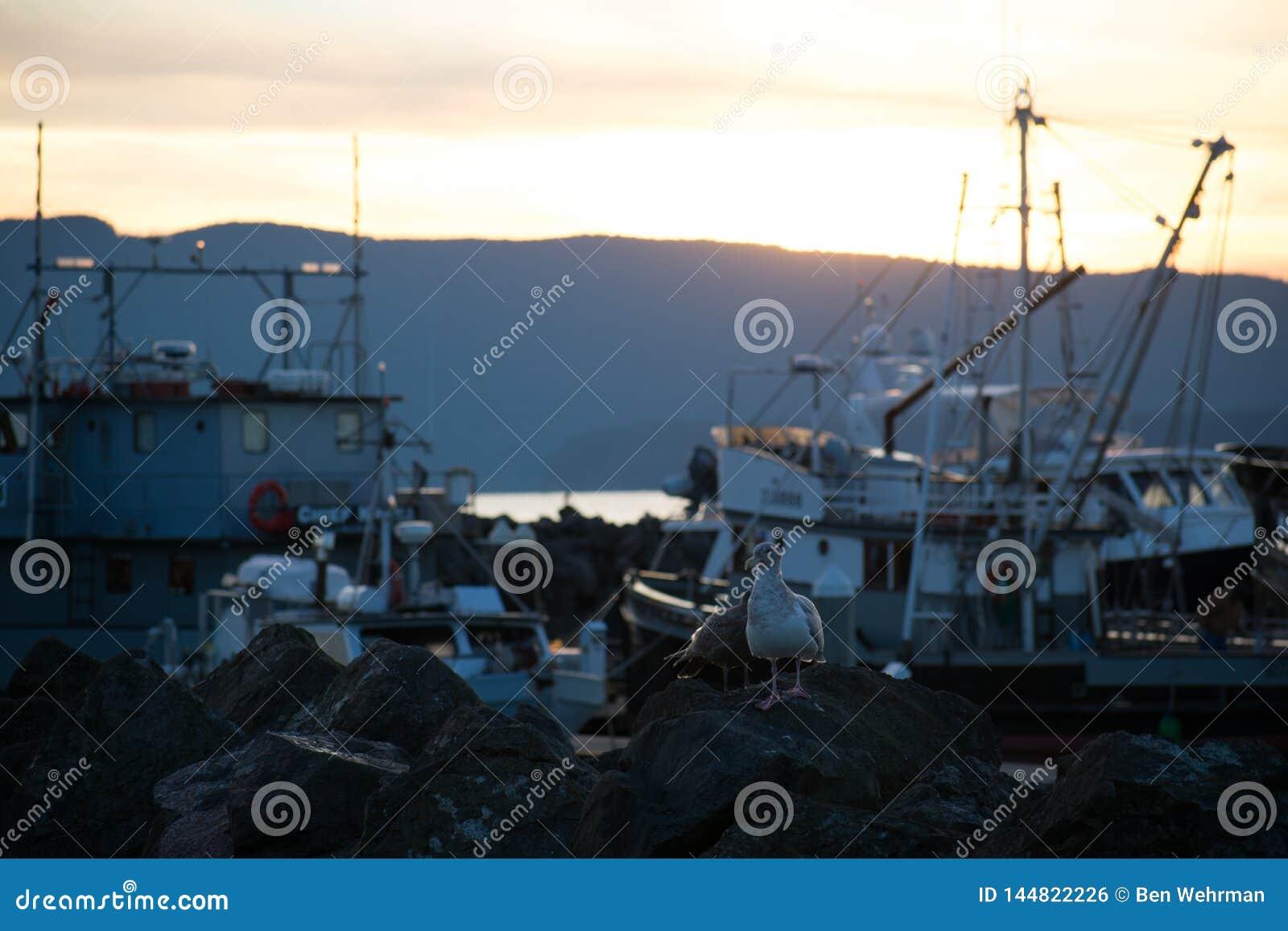 在小游艇船坞的日落