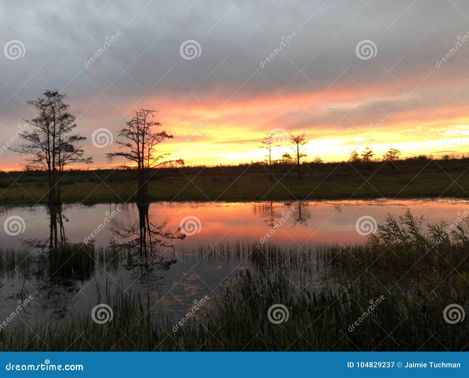 在有波纹的沼泽使日落陷入沼泽在水中