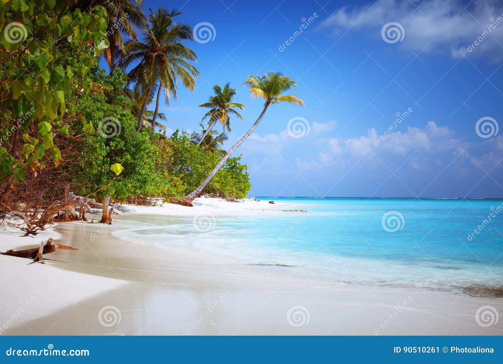 在有白色含沙田园诗完善的海滩和海和曲线棕榈的马尔代夫海岛Fulhadhoo靠岸